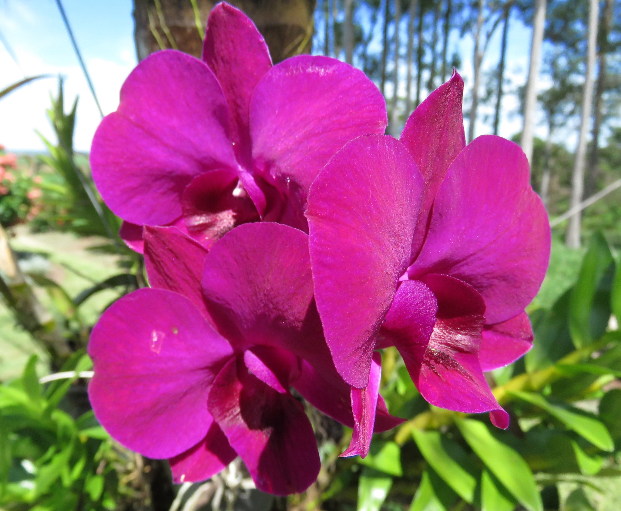 Marvelous orchid by Nestor