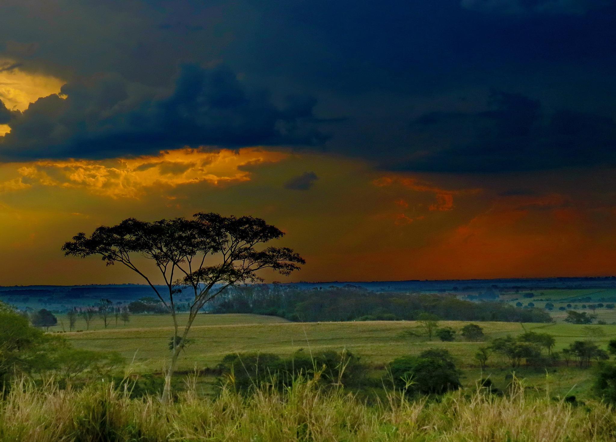 Rain by Nestor