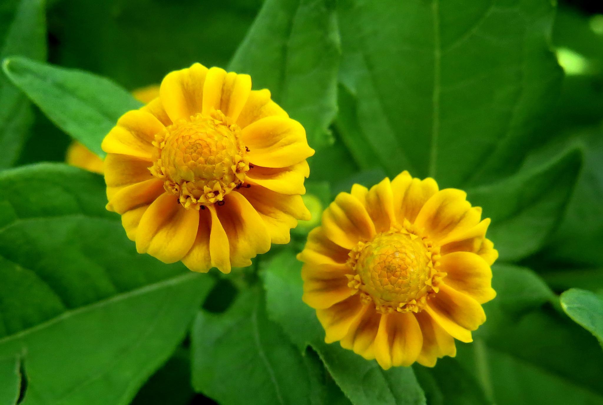 Micro flower by Nestor