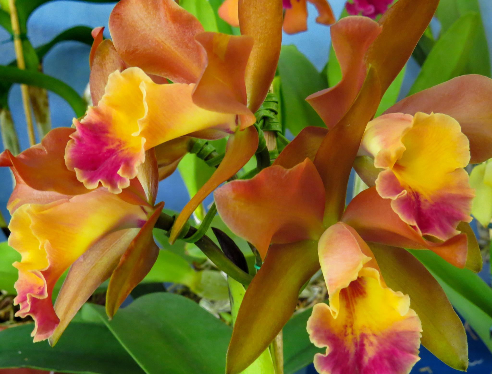 Orquídea by Nestor