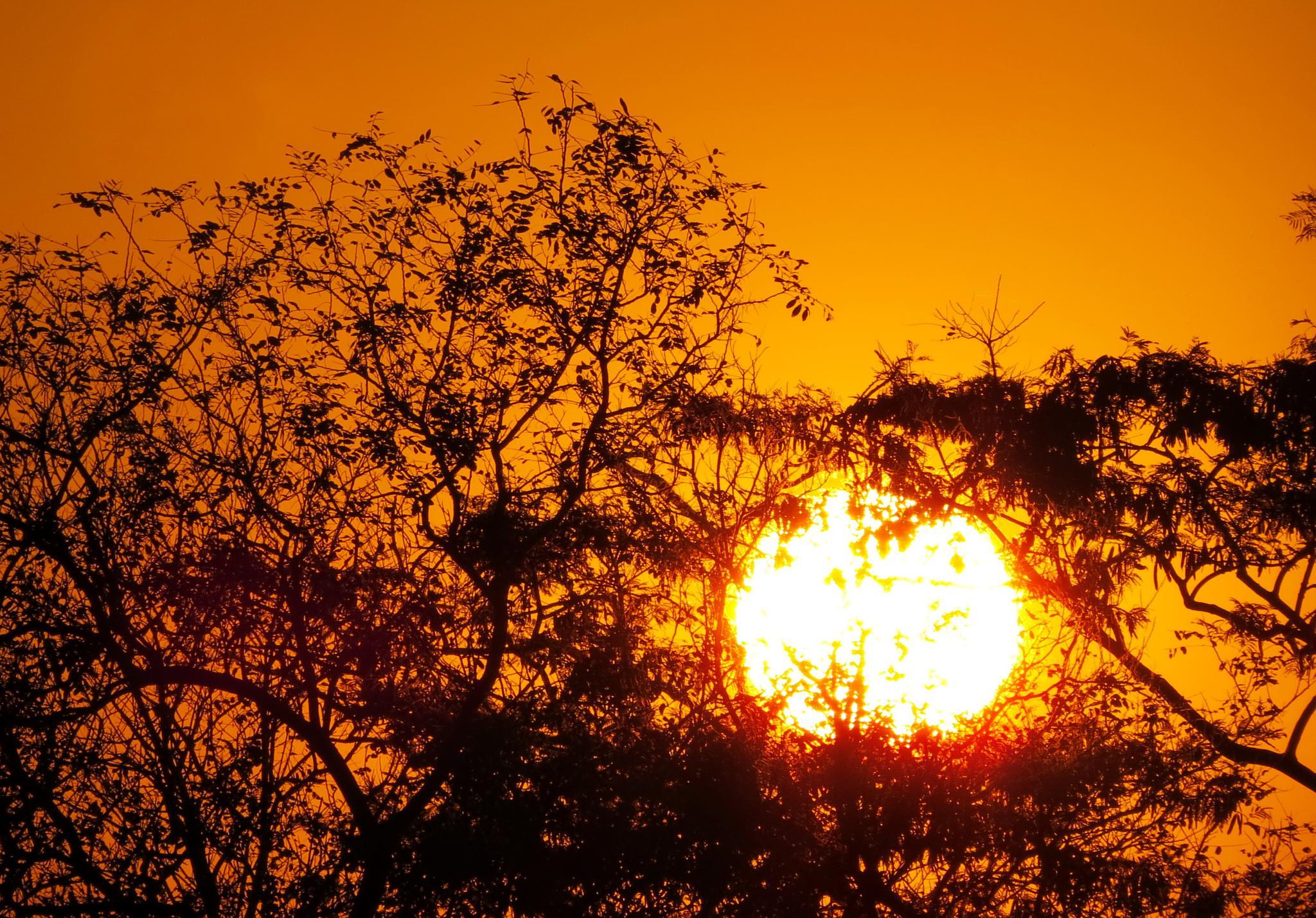 Sundown  by Nestor