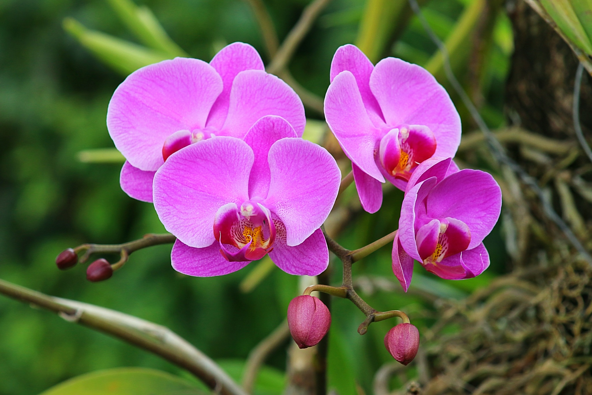 New flowers by Nestor