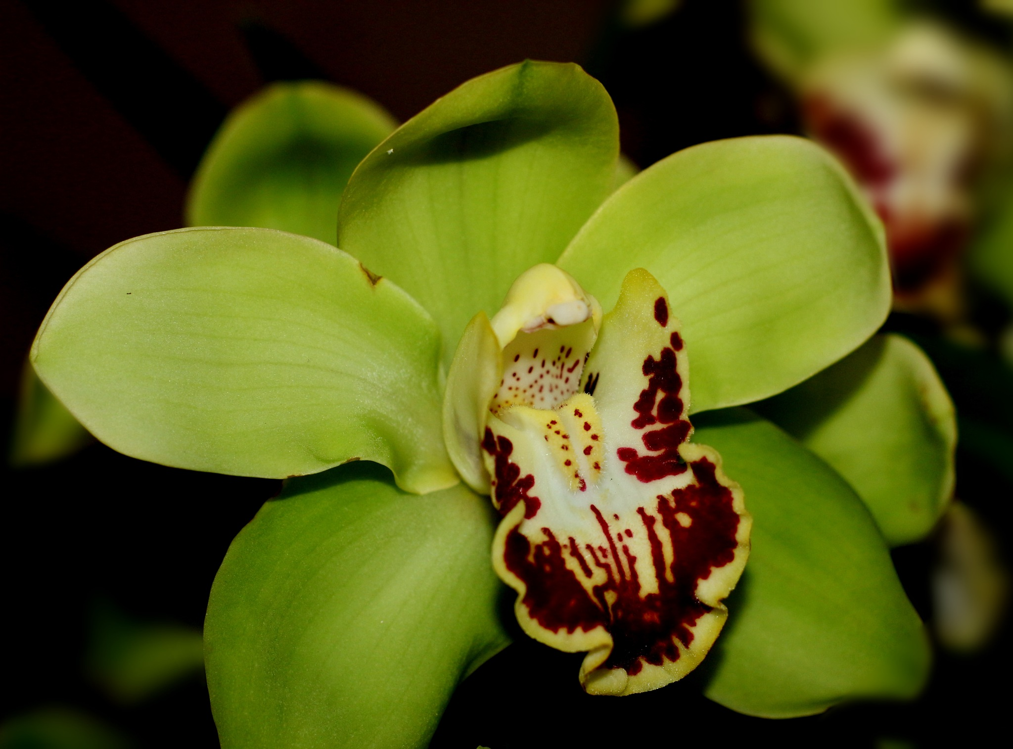 Green orchid. by Nestor