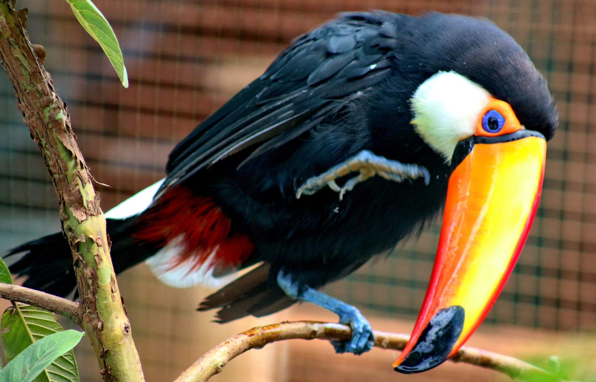 Photo in Nature #toucan #nature #park #garden