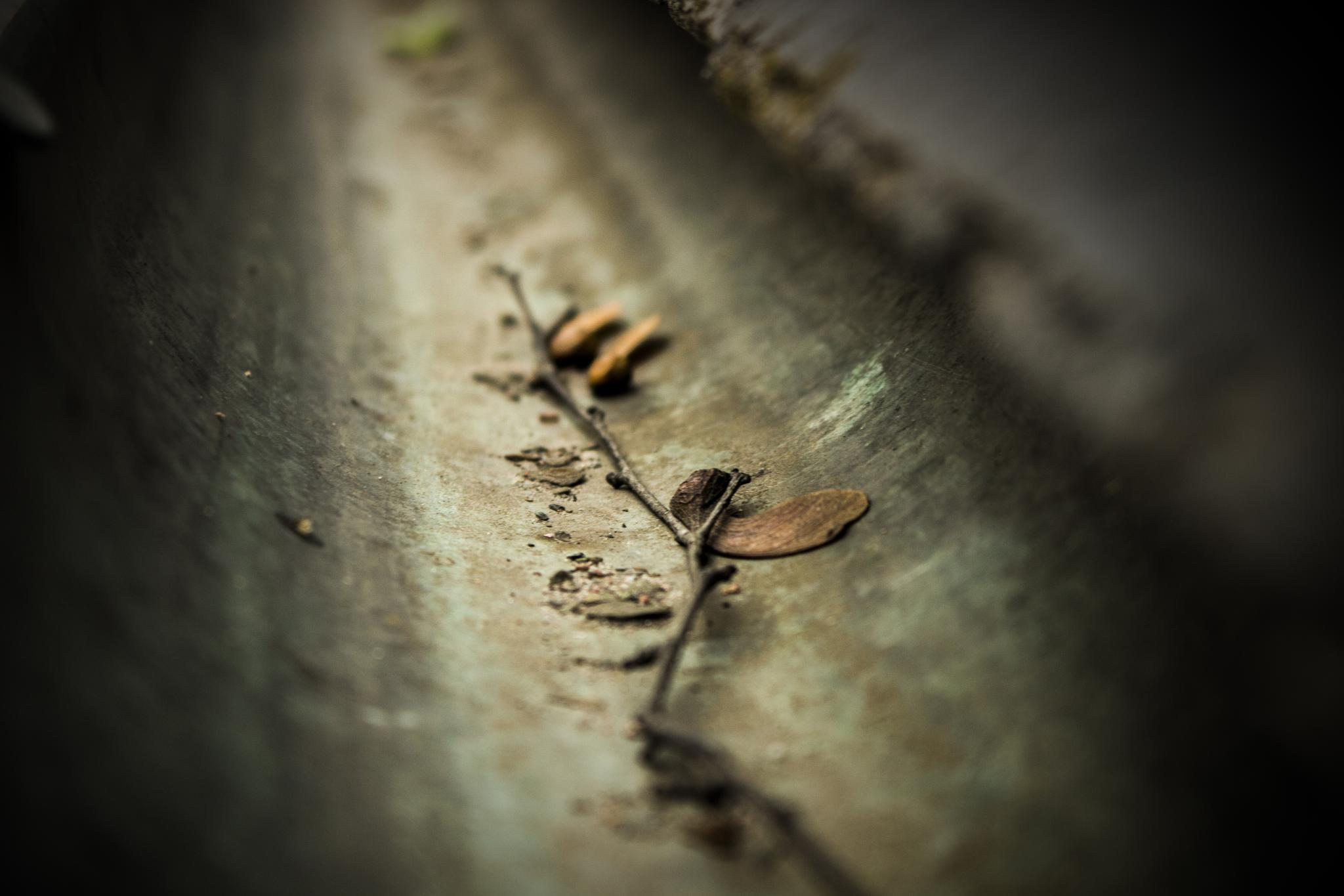 Waiting for the rain... by Jan Bothmann