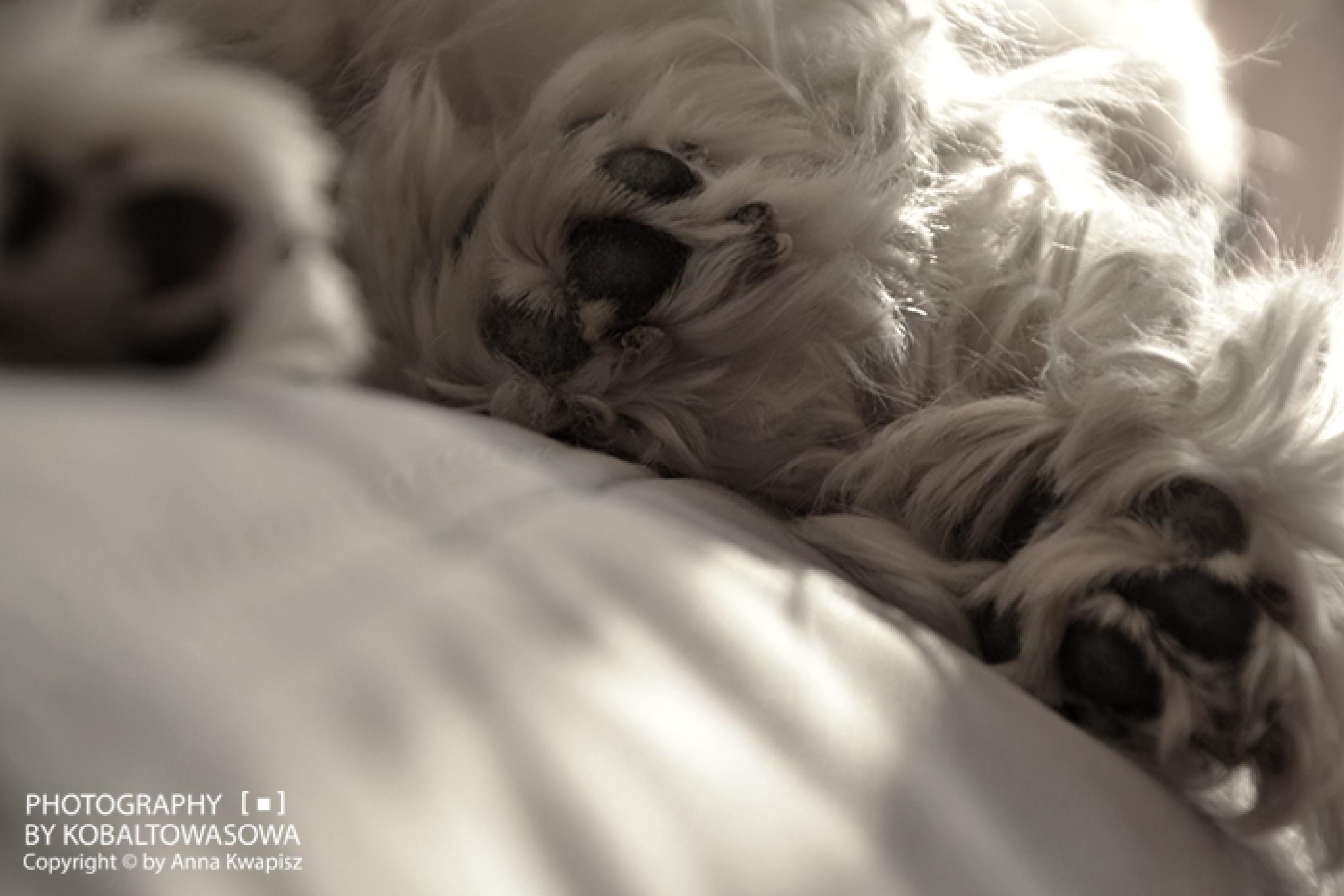Four paws by kobaltowasowa
