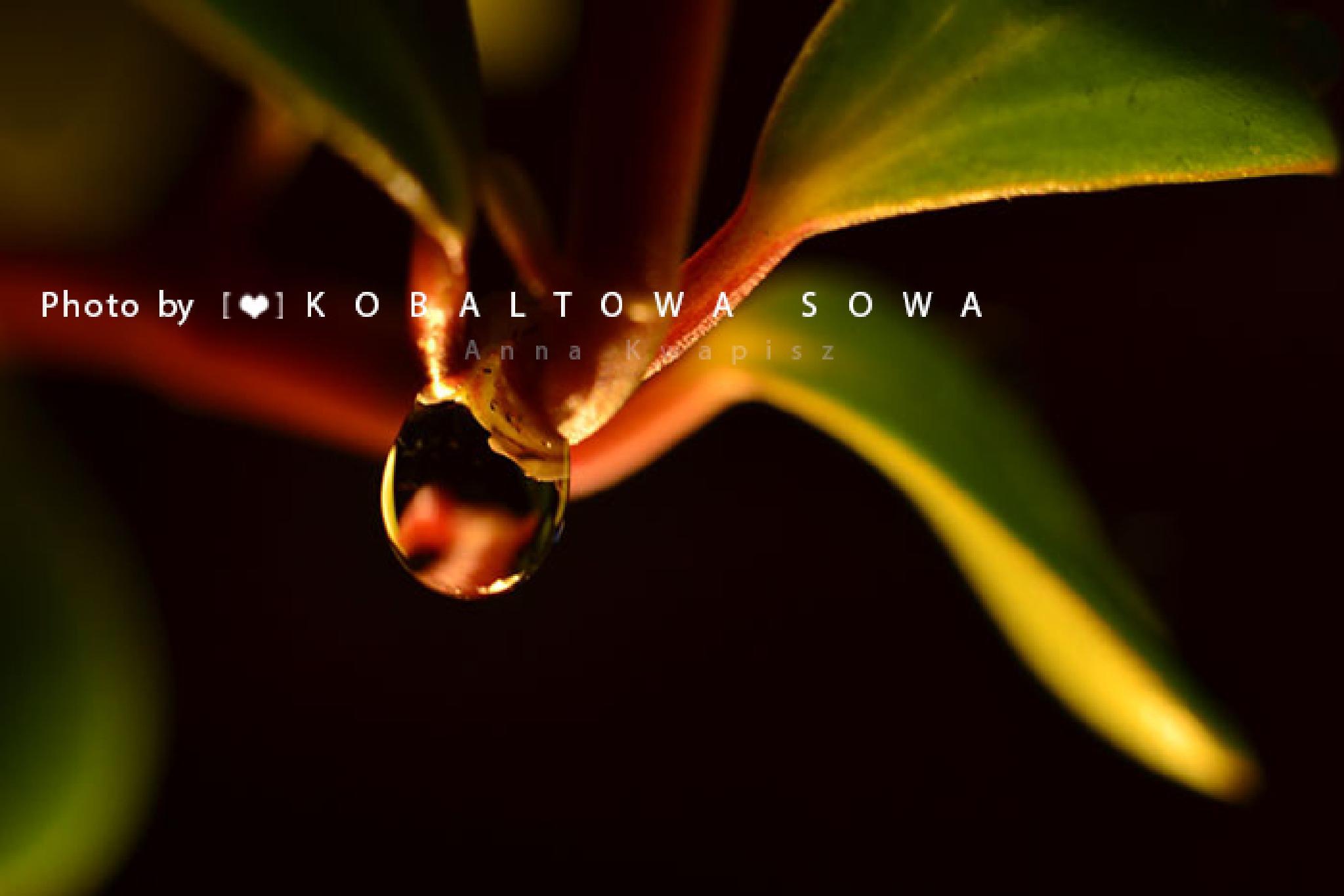 Flower by kobaltowasowa
