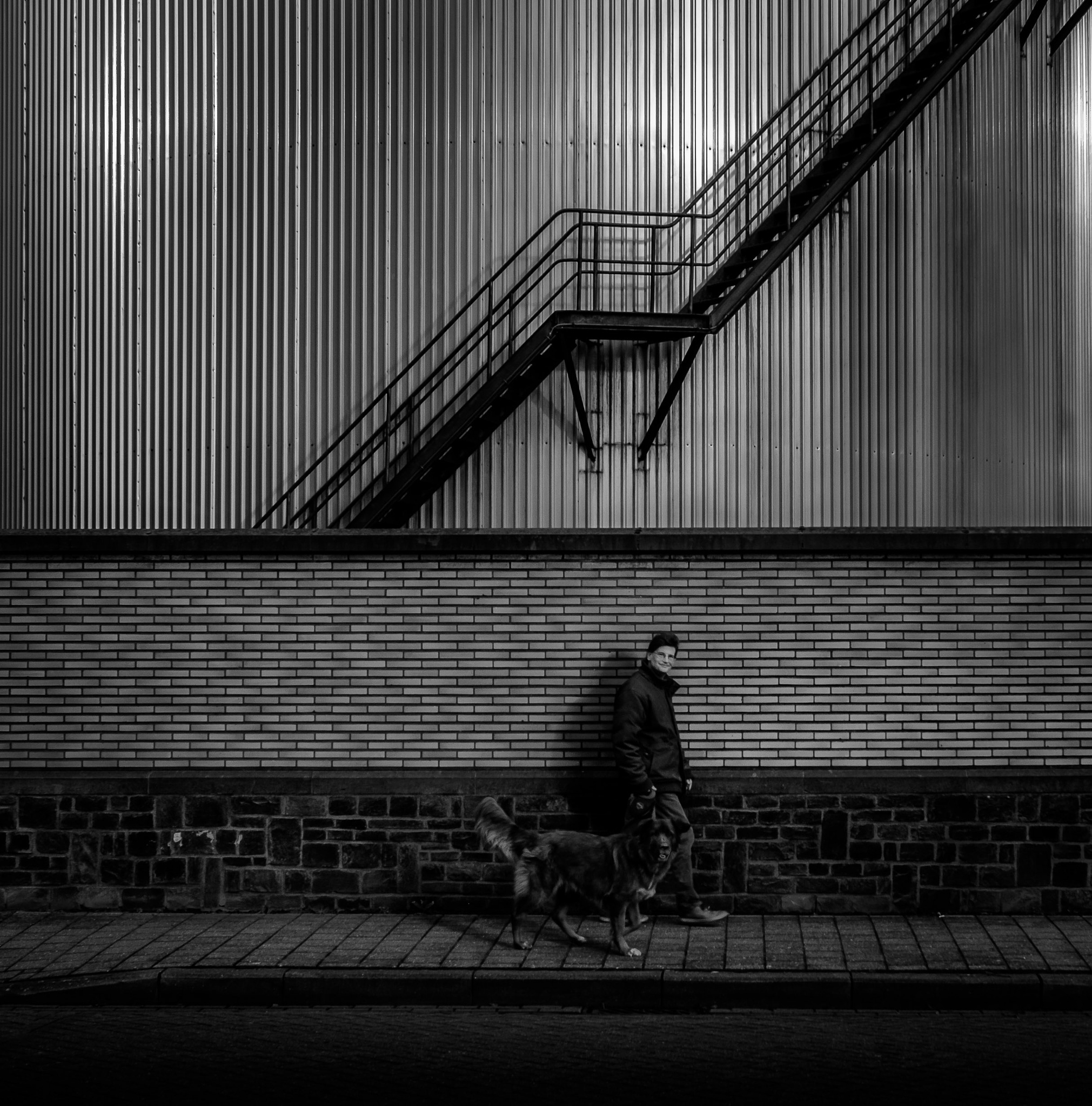 The dog's way home by fotoclaesjohn