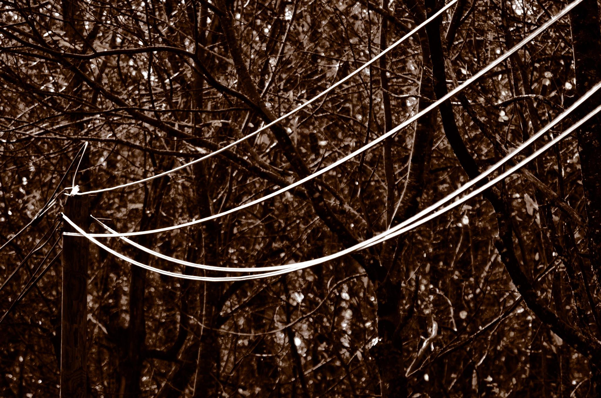 Telephone Lines by Keith Patrak