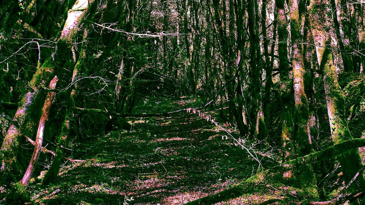 Old Trans-Correzian Track by Keith Patrak