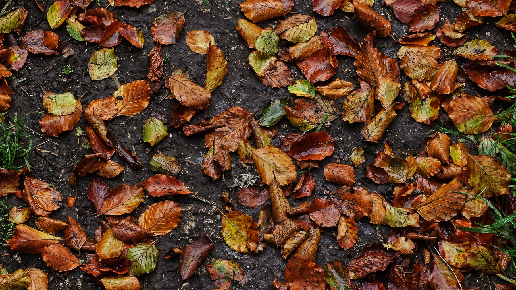Autumn Leaves by Keith Patrak