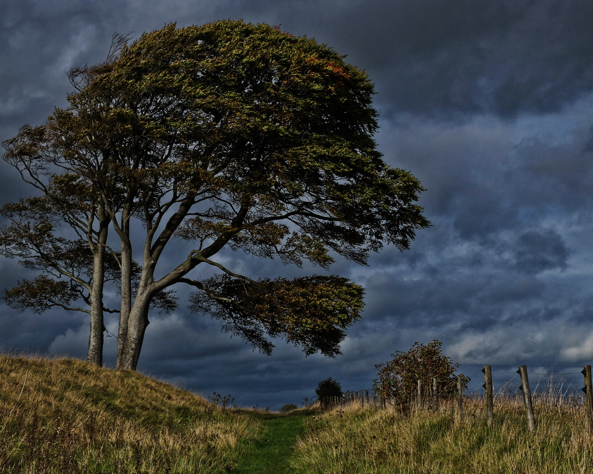 Tree In The Storm by Keith Patrak