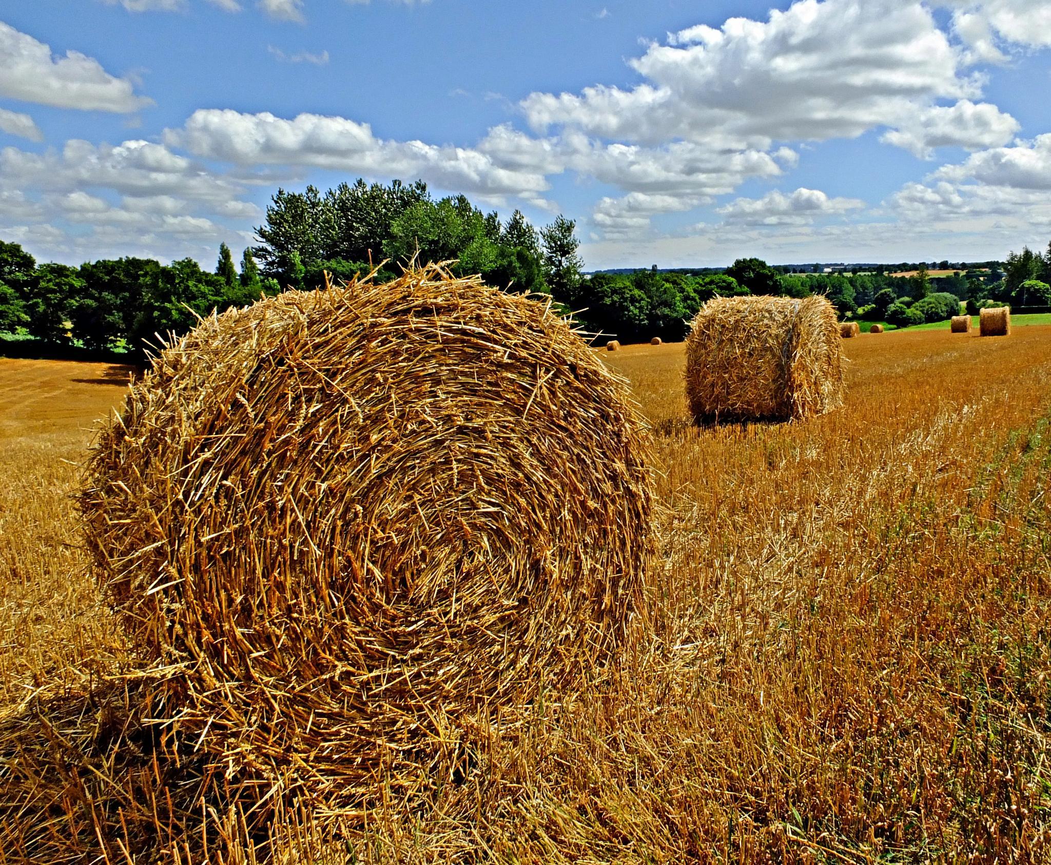 Hay Bales by Keith Patrak