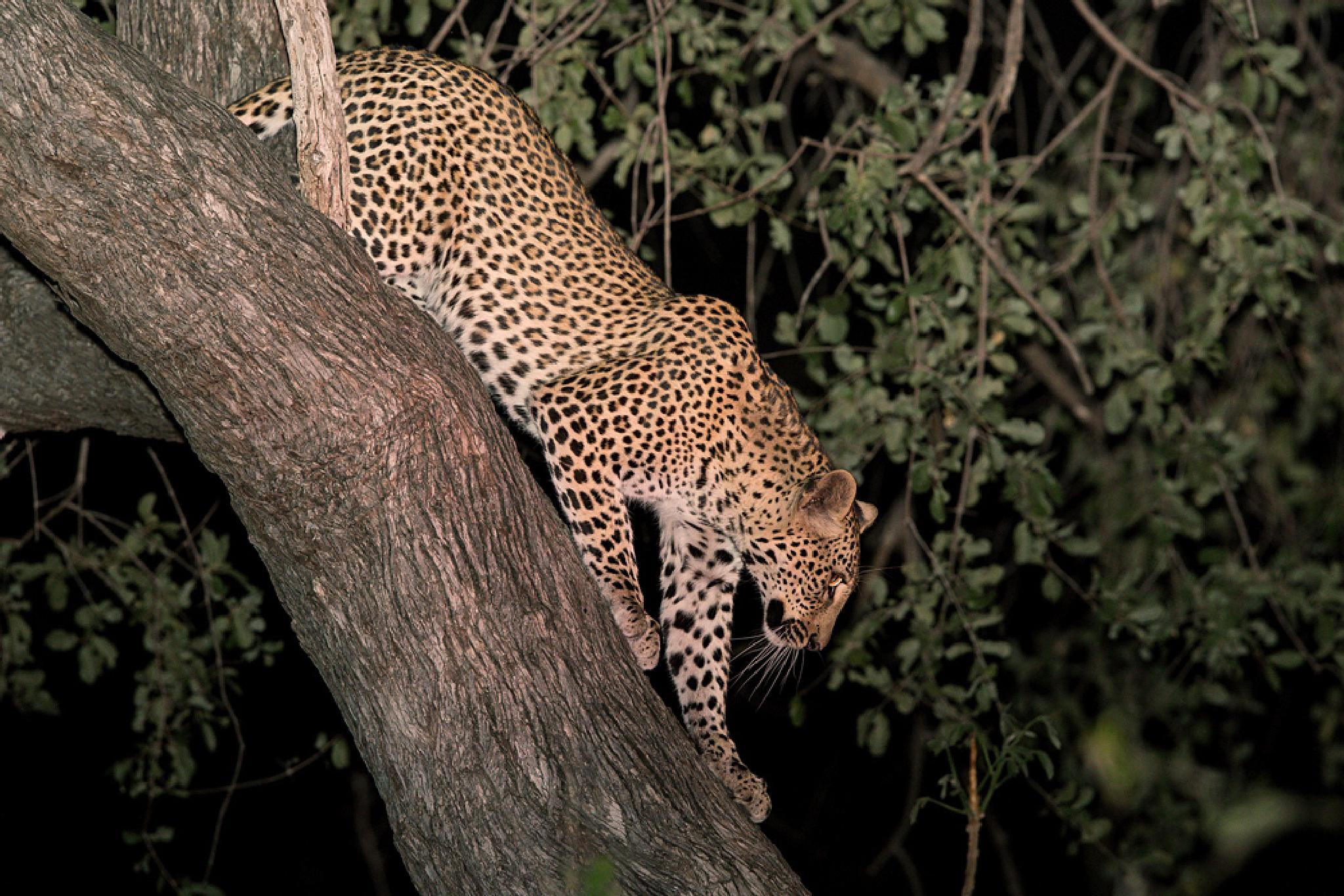 Night whiskers by Thomas Retterath