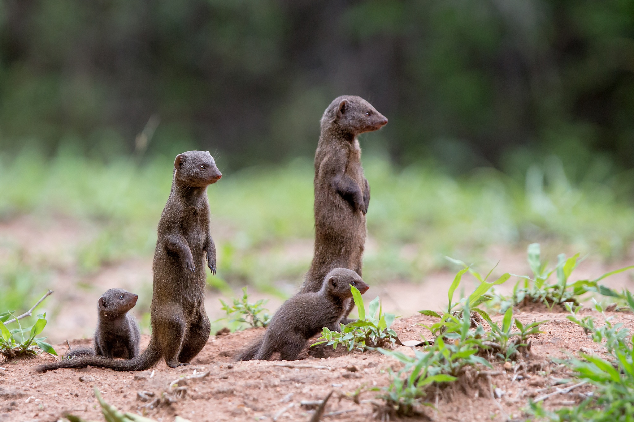 We are family by Thomas Retterath