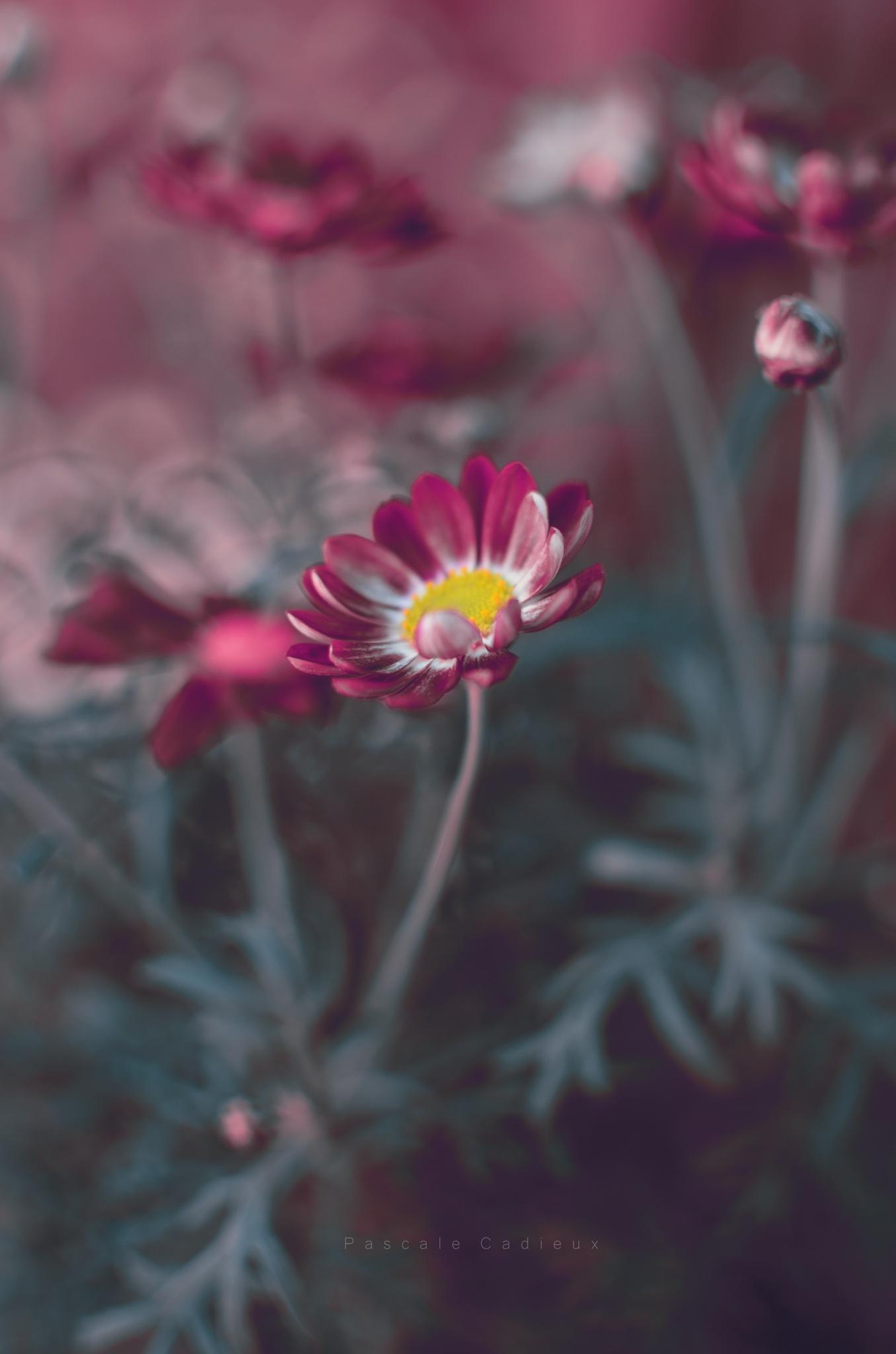 Dans un jardin by Pascale