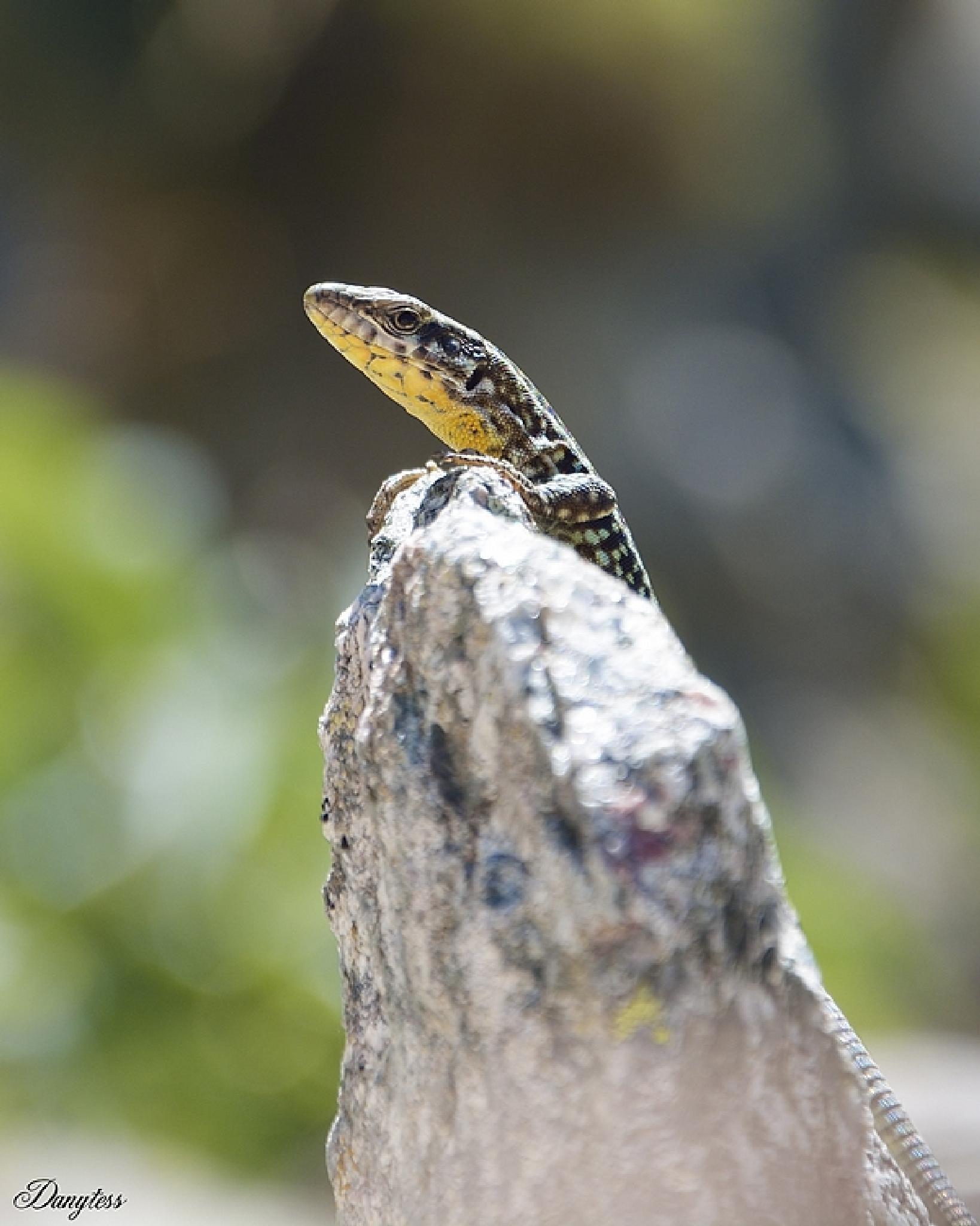 Lézard Lizard by Mickael Arnaud