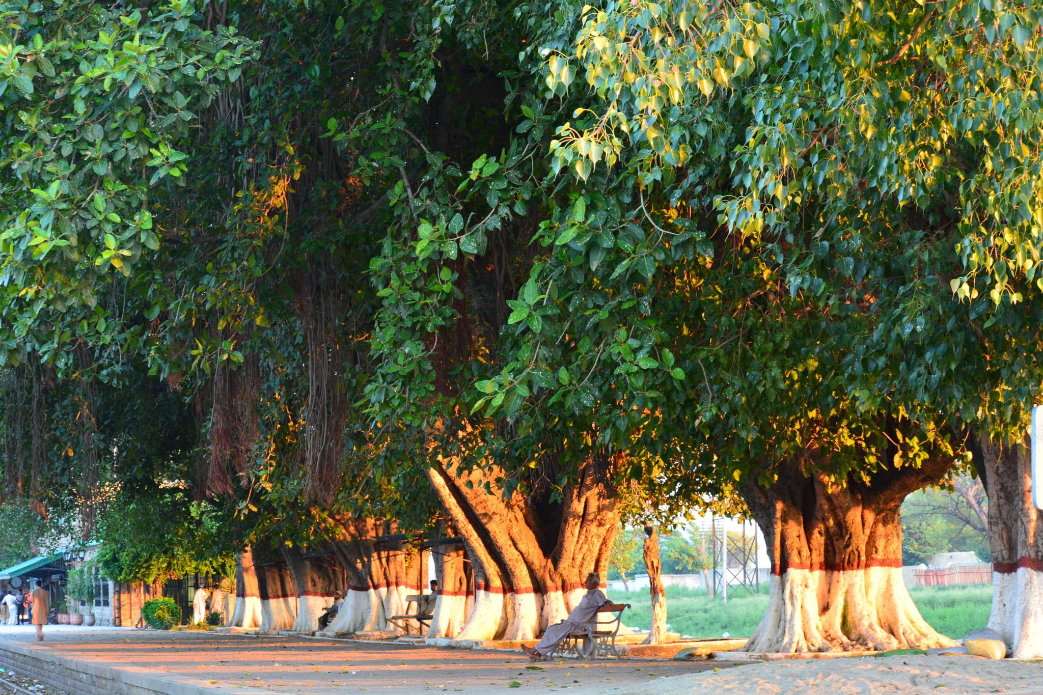 Trees by Mehtab Hussain