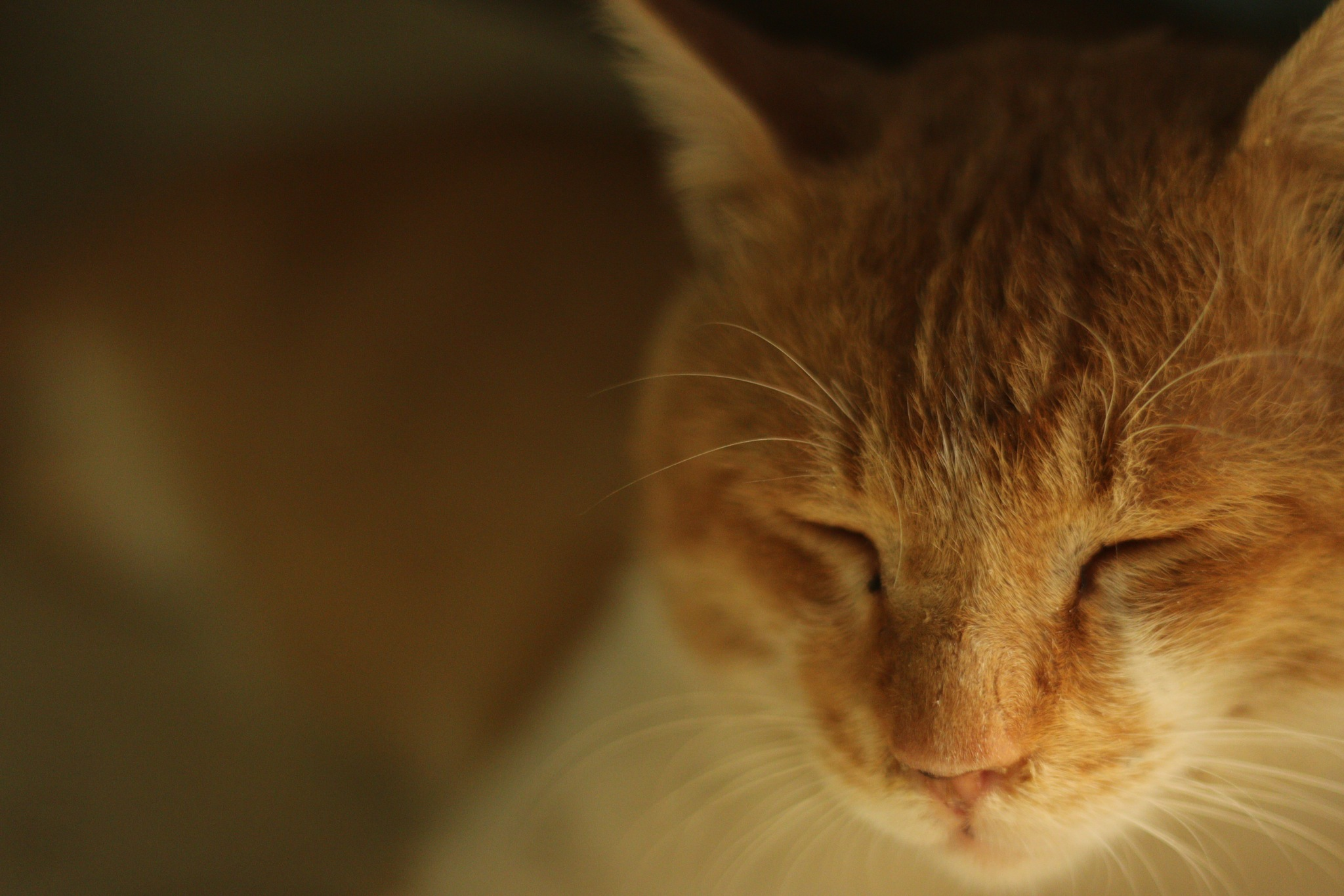 cat by Mehtab Hussain