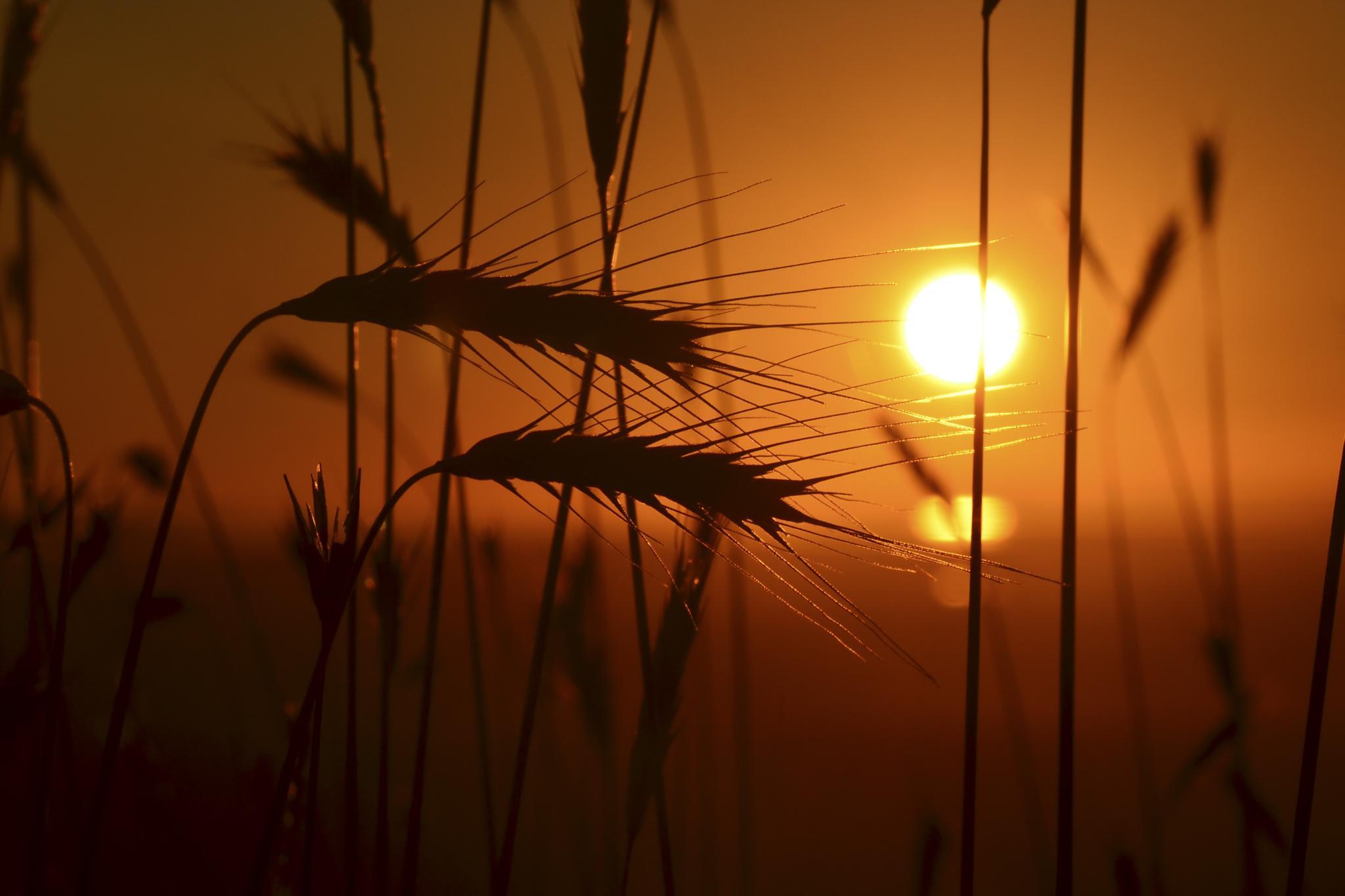 Glorious Sunset by Quinn McKenna