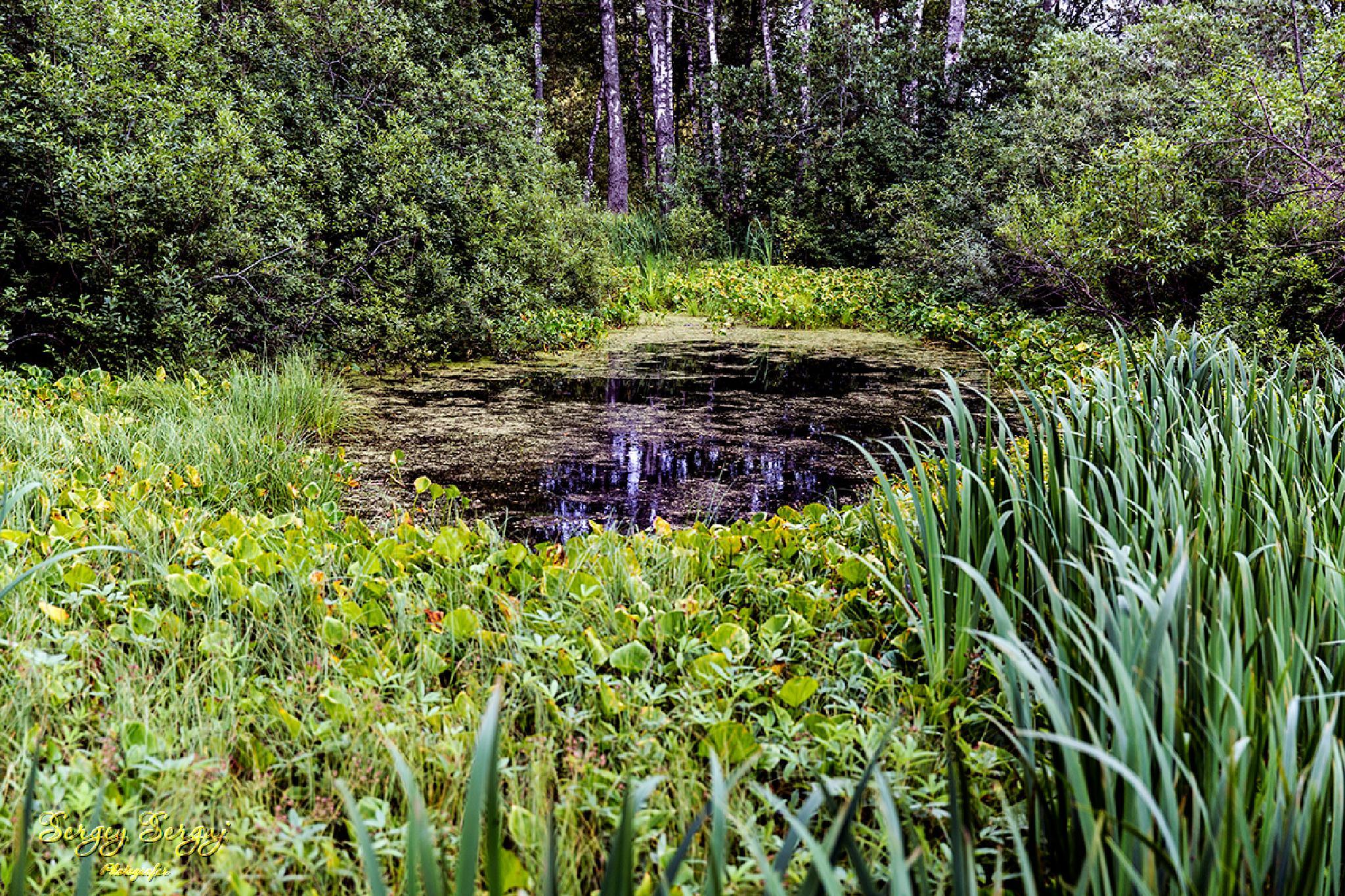 Wild pond by Sergey Sergaj