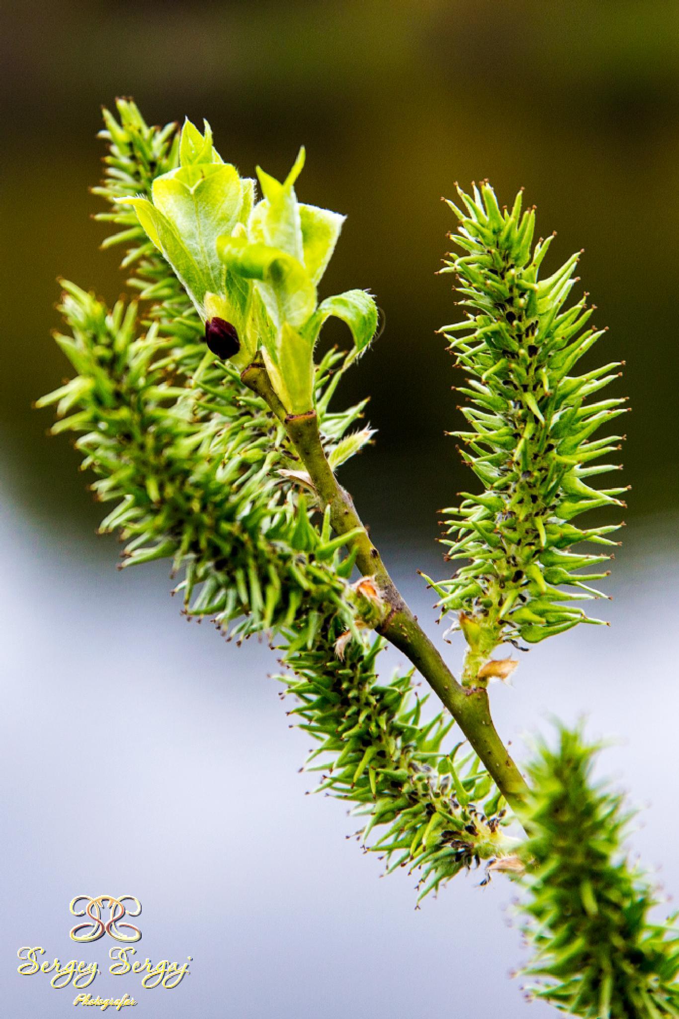 Spring leaves by Sergey Sergaj