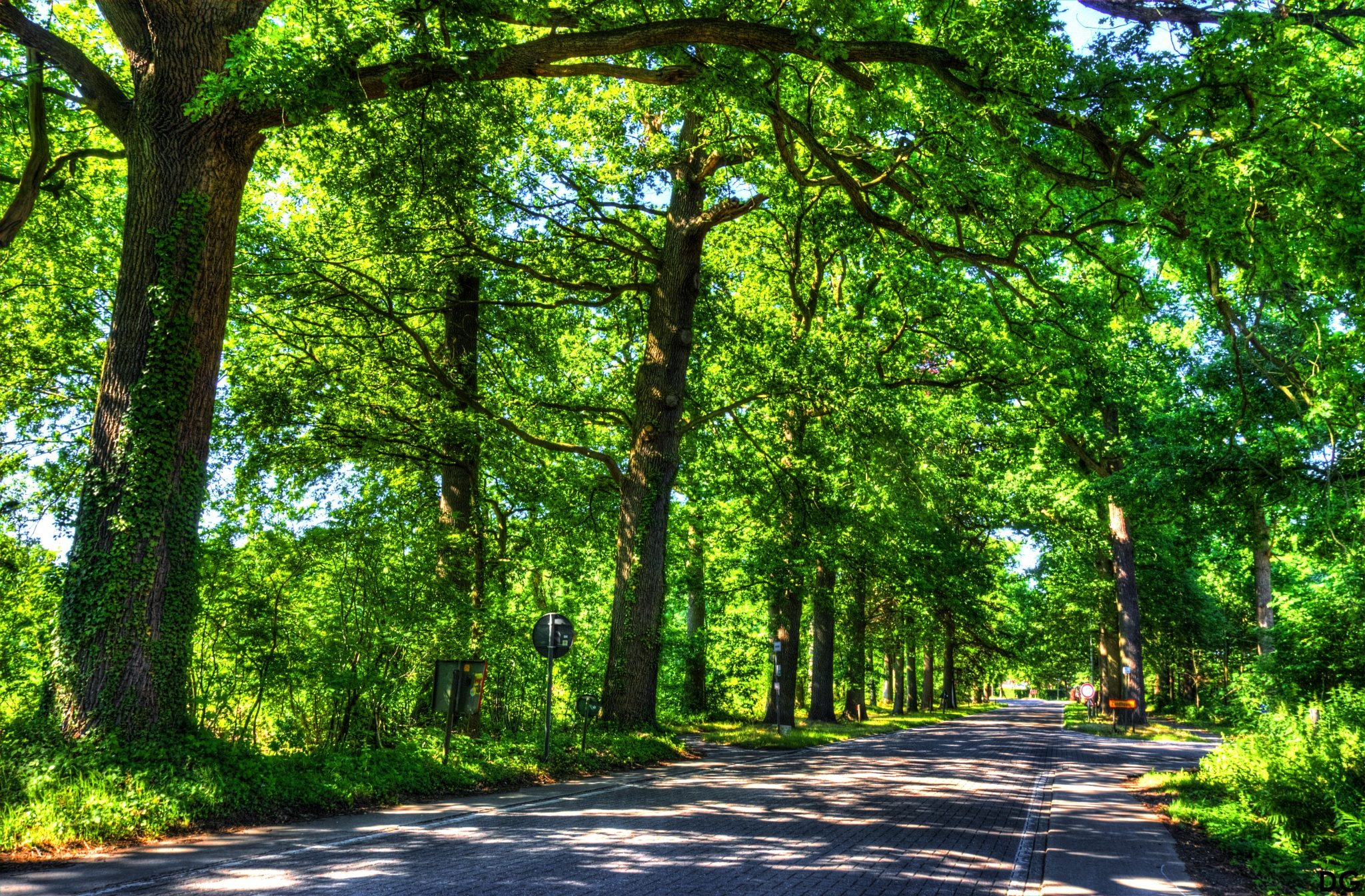 Road I. by Dirk Gonthier