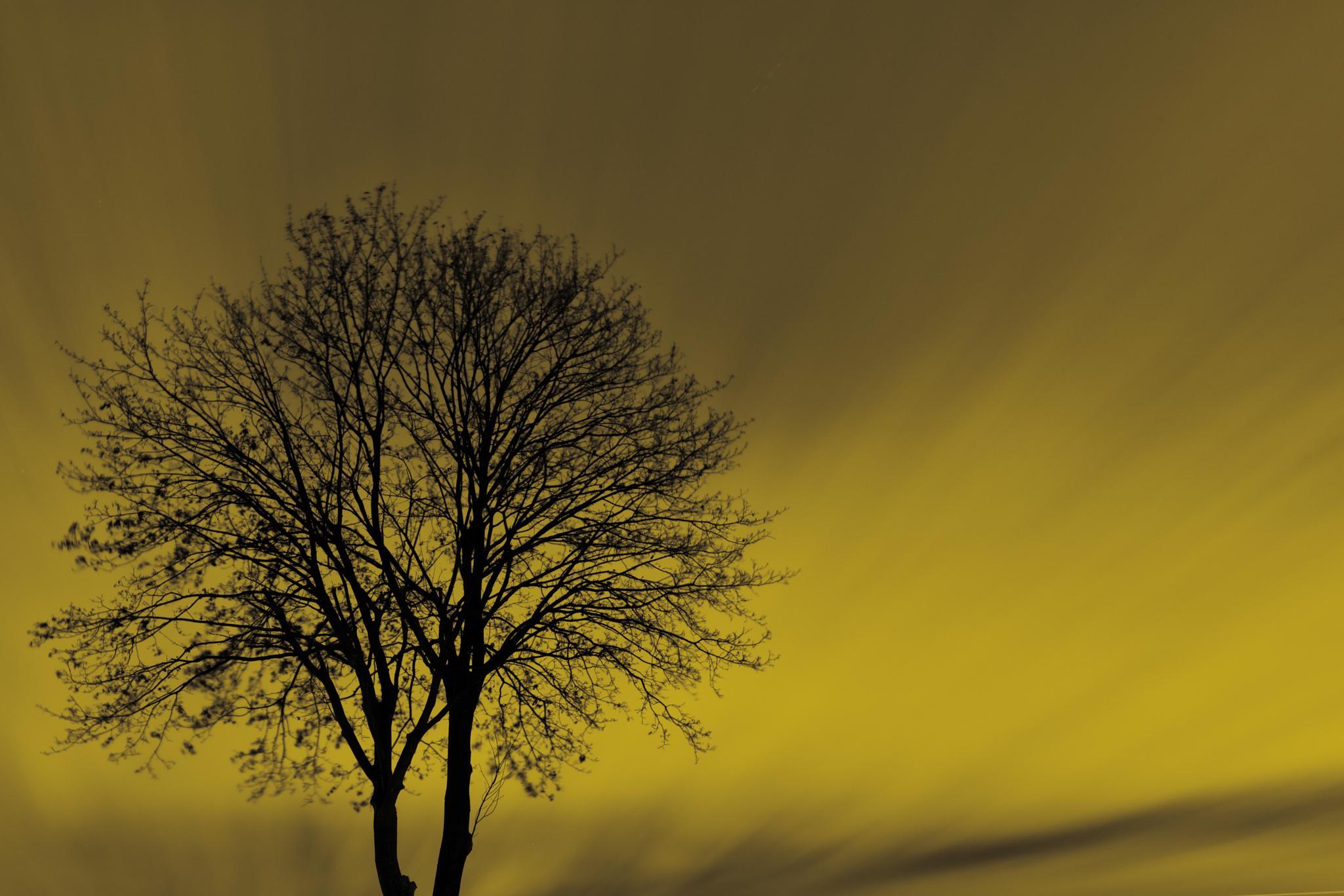 Tree by Joachim Lehmann