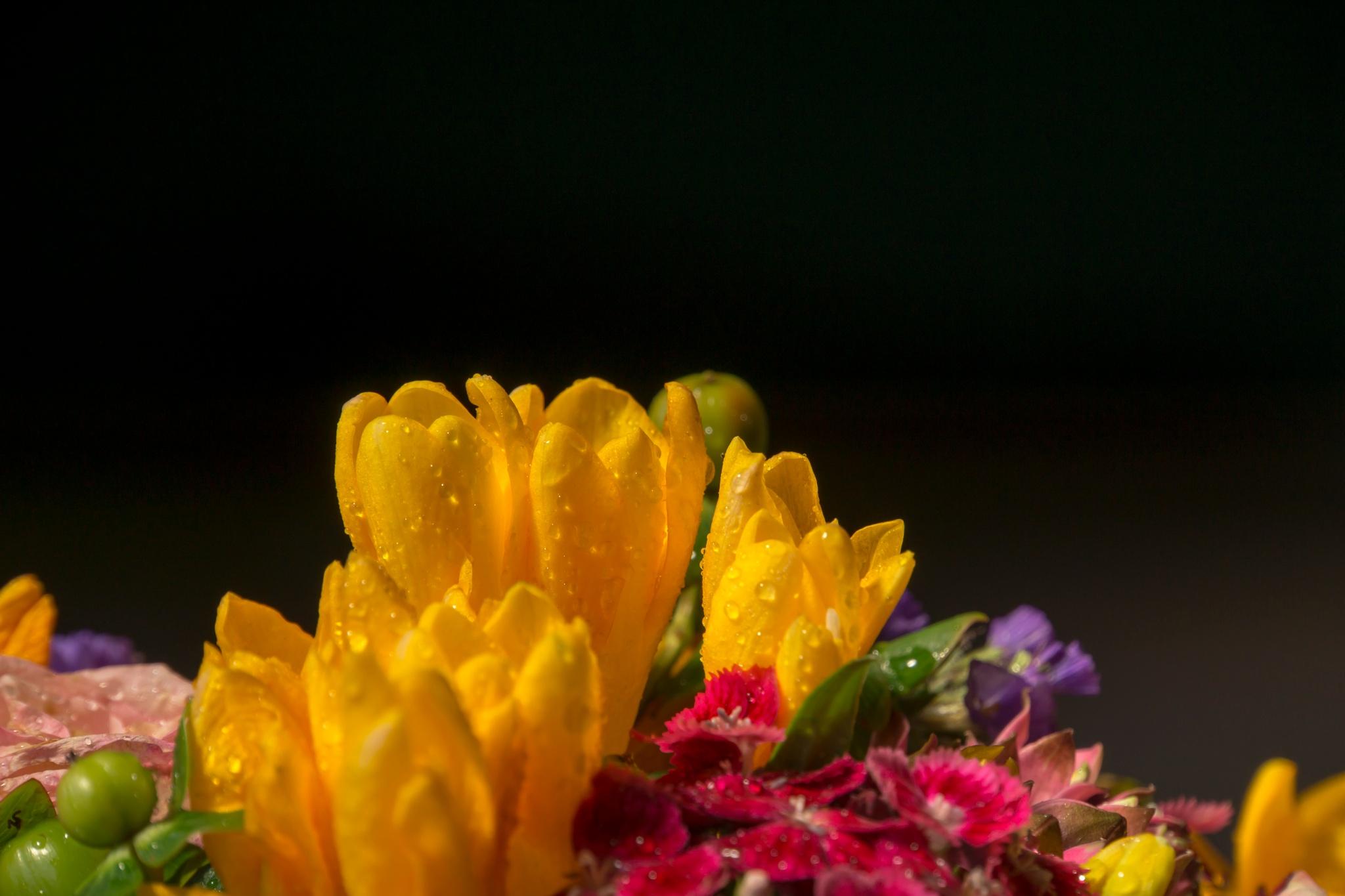 yellow freesia by lizardofthewisard