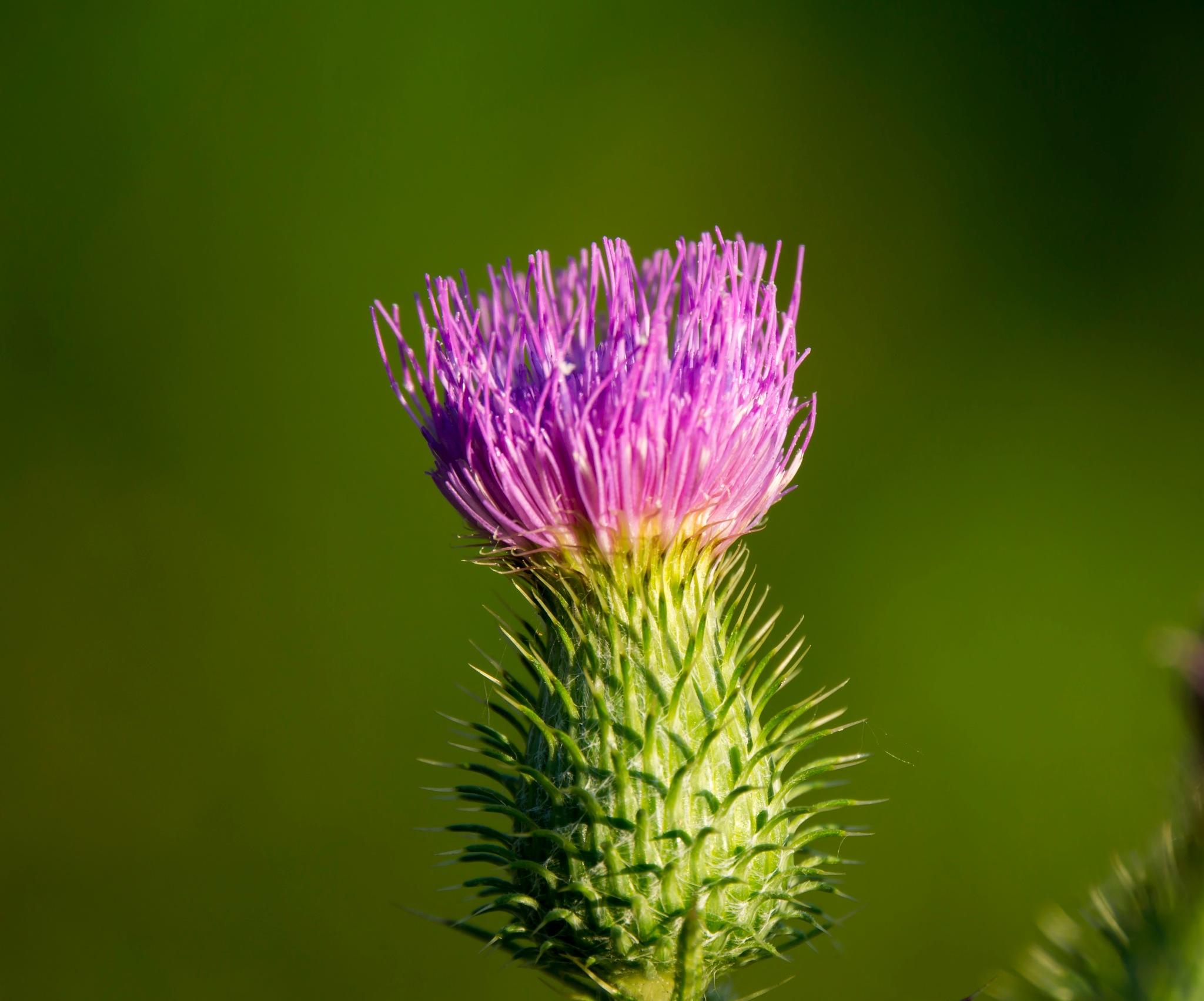 wild flower by lizardofthewisard
