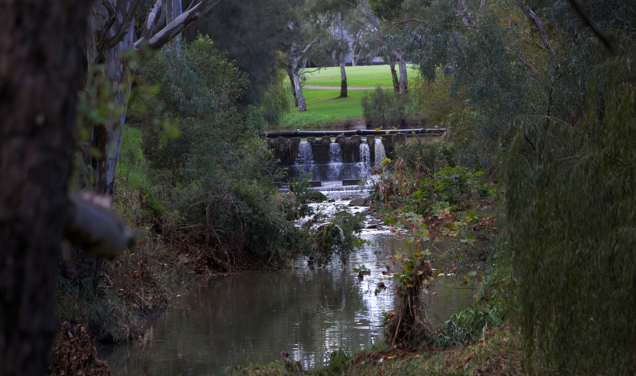 River Torrens  by RobbieP