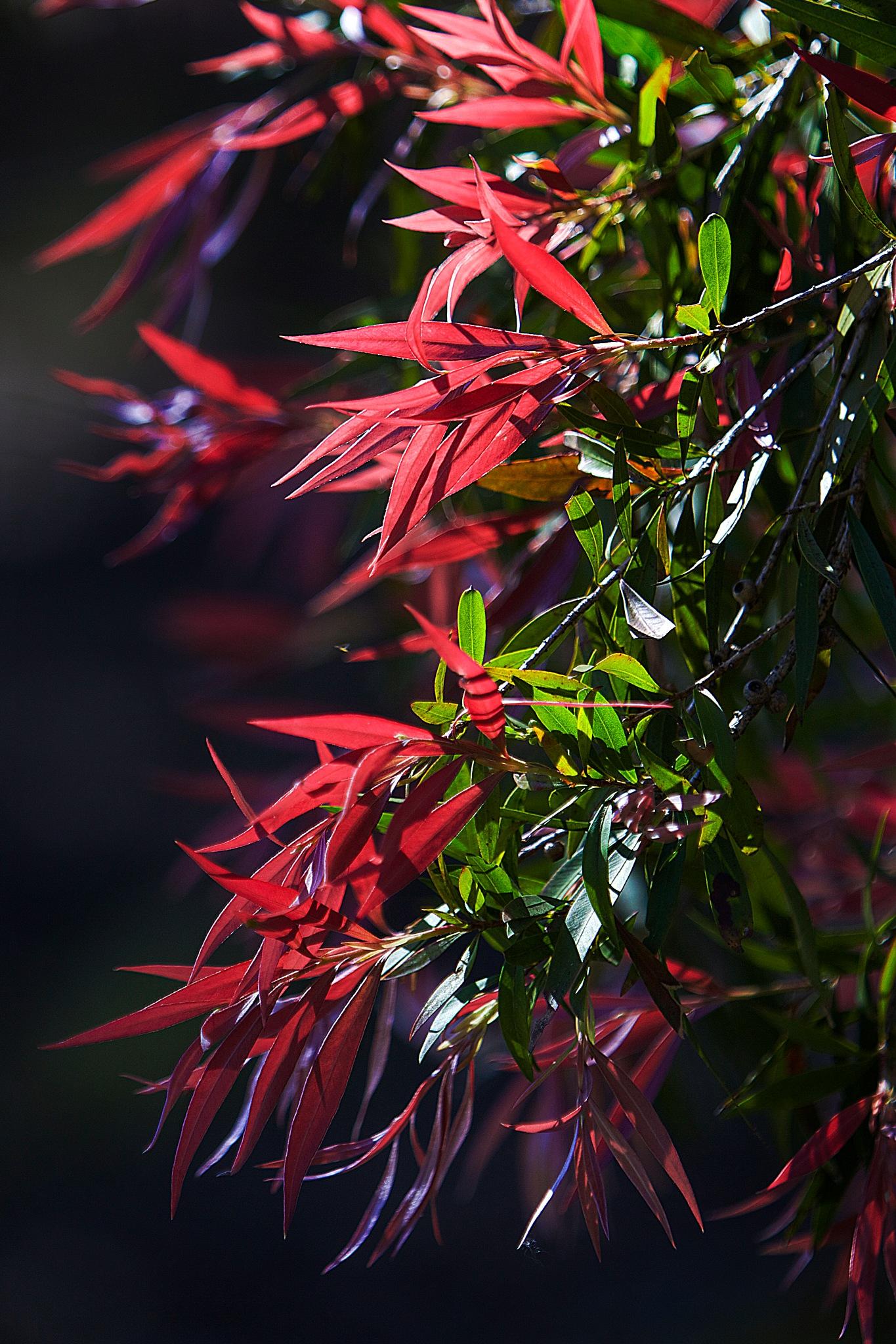 Leaves by RobbieP