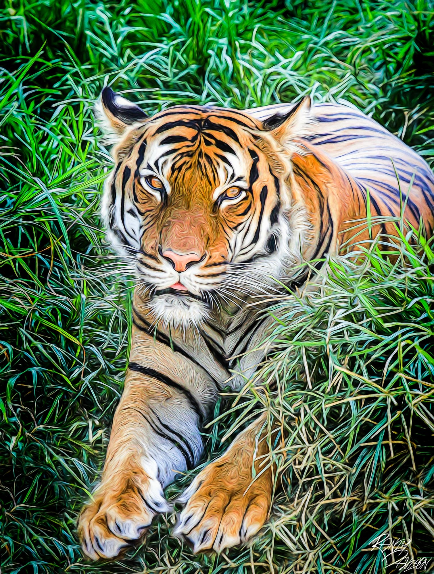 Tiger in the grass by randydavison