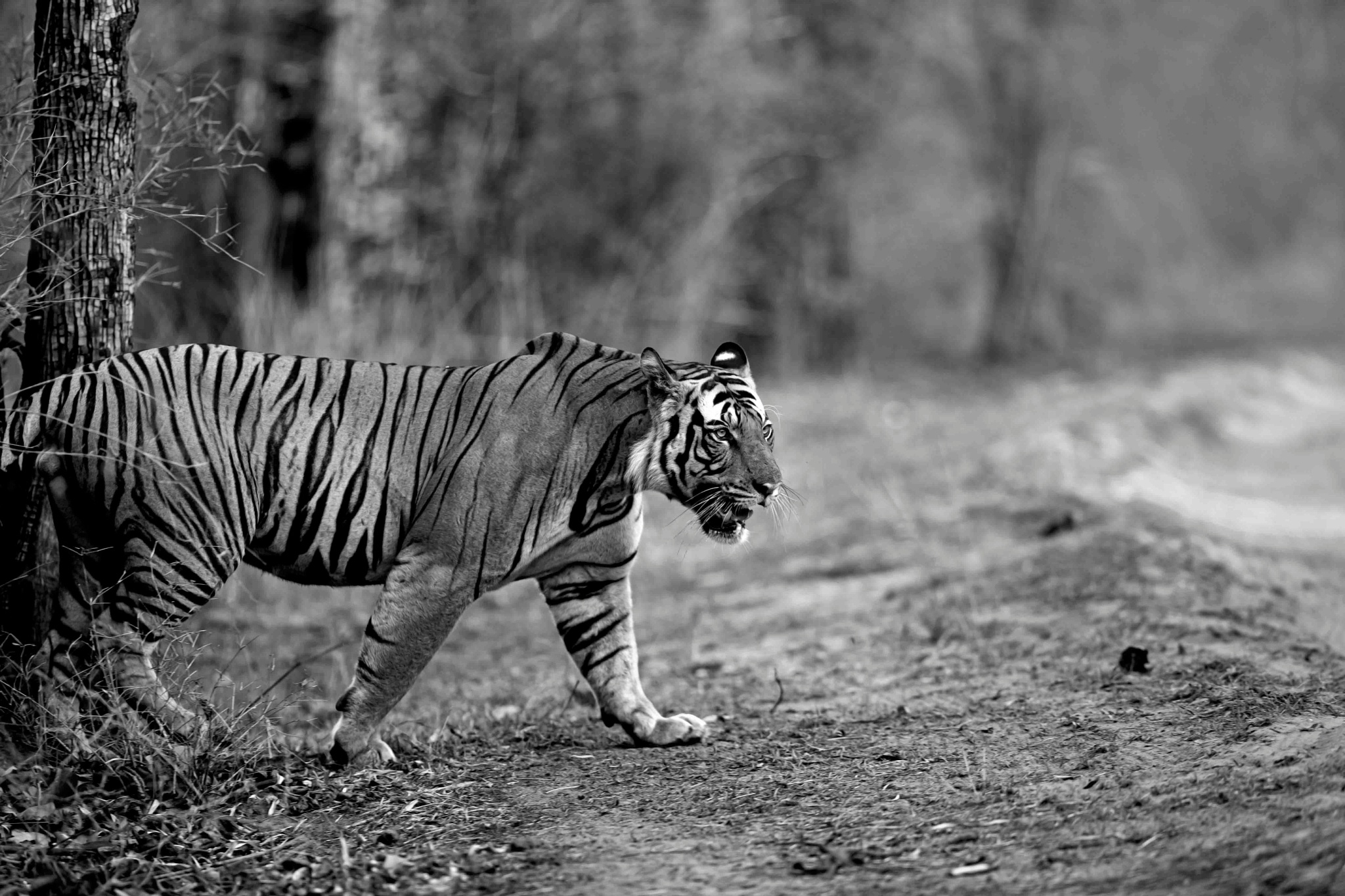 _THE KING!!!!early morning stroll..._ by guran60