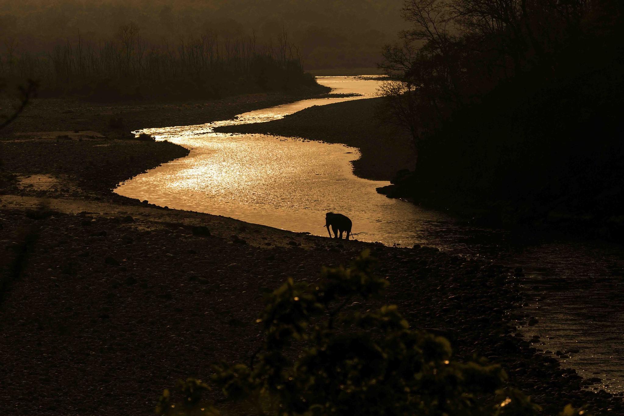 Lone Tusker - Silhoutte by guran60