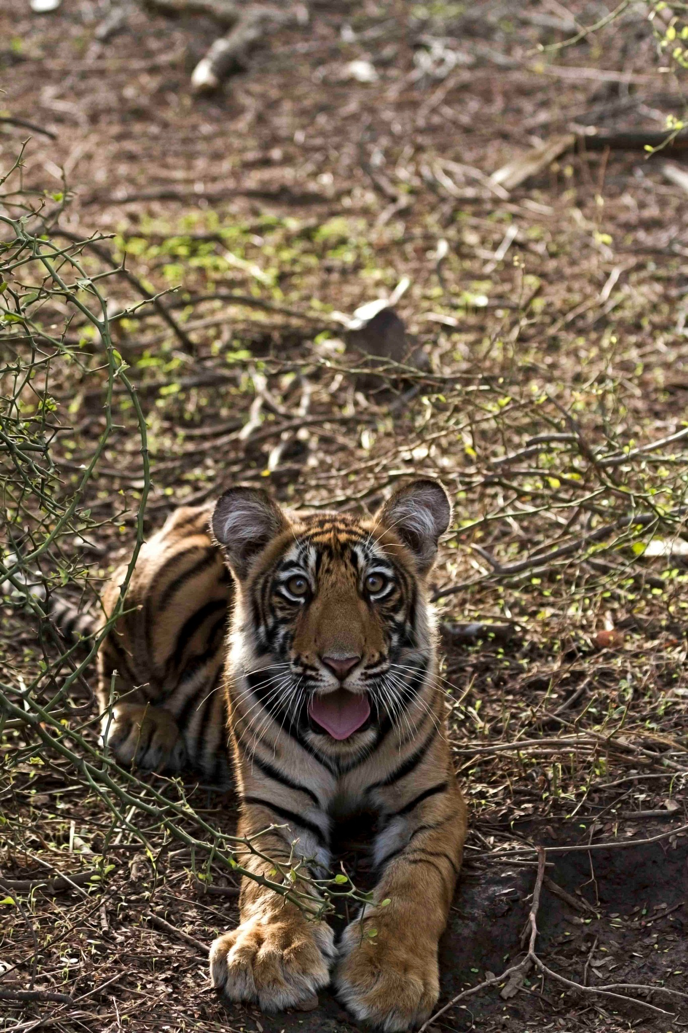 _OH!!! that expression..._ cub by guran60