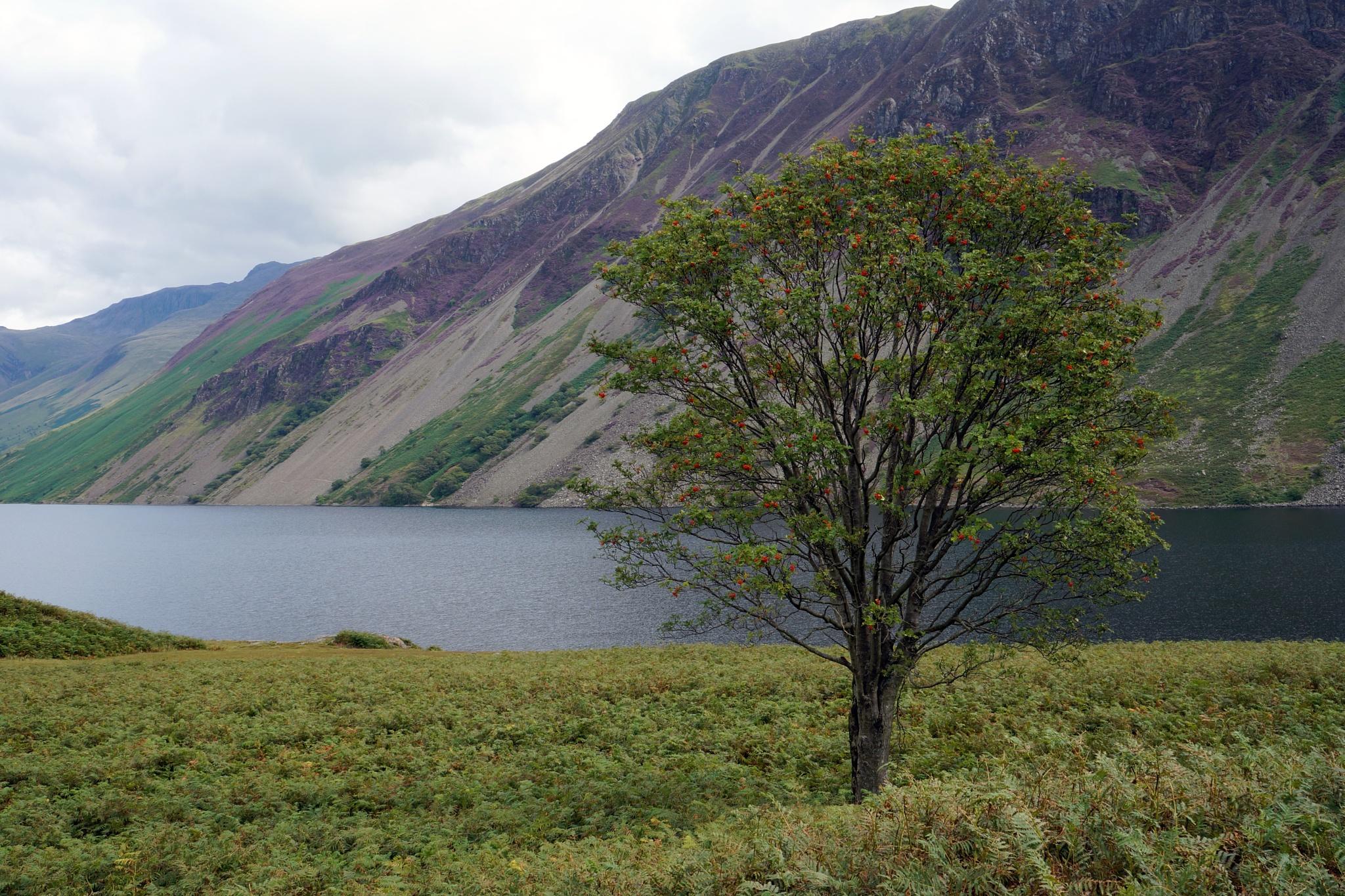 Lone Tree by KarenHaile