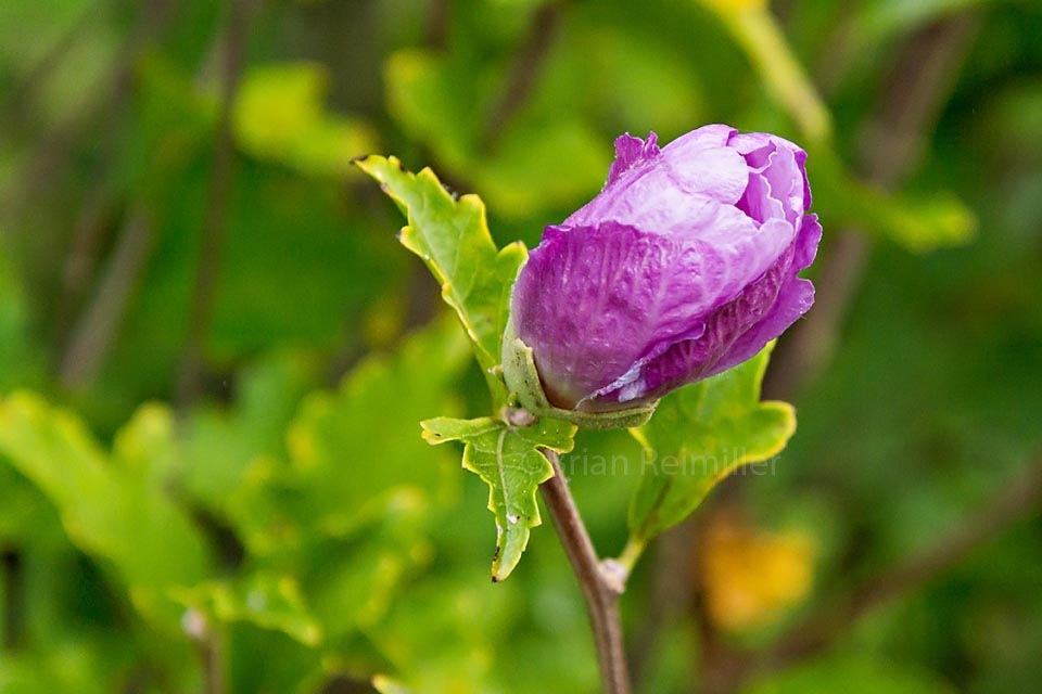 Autumn Flower 4 by Brian Reimiller