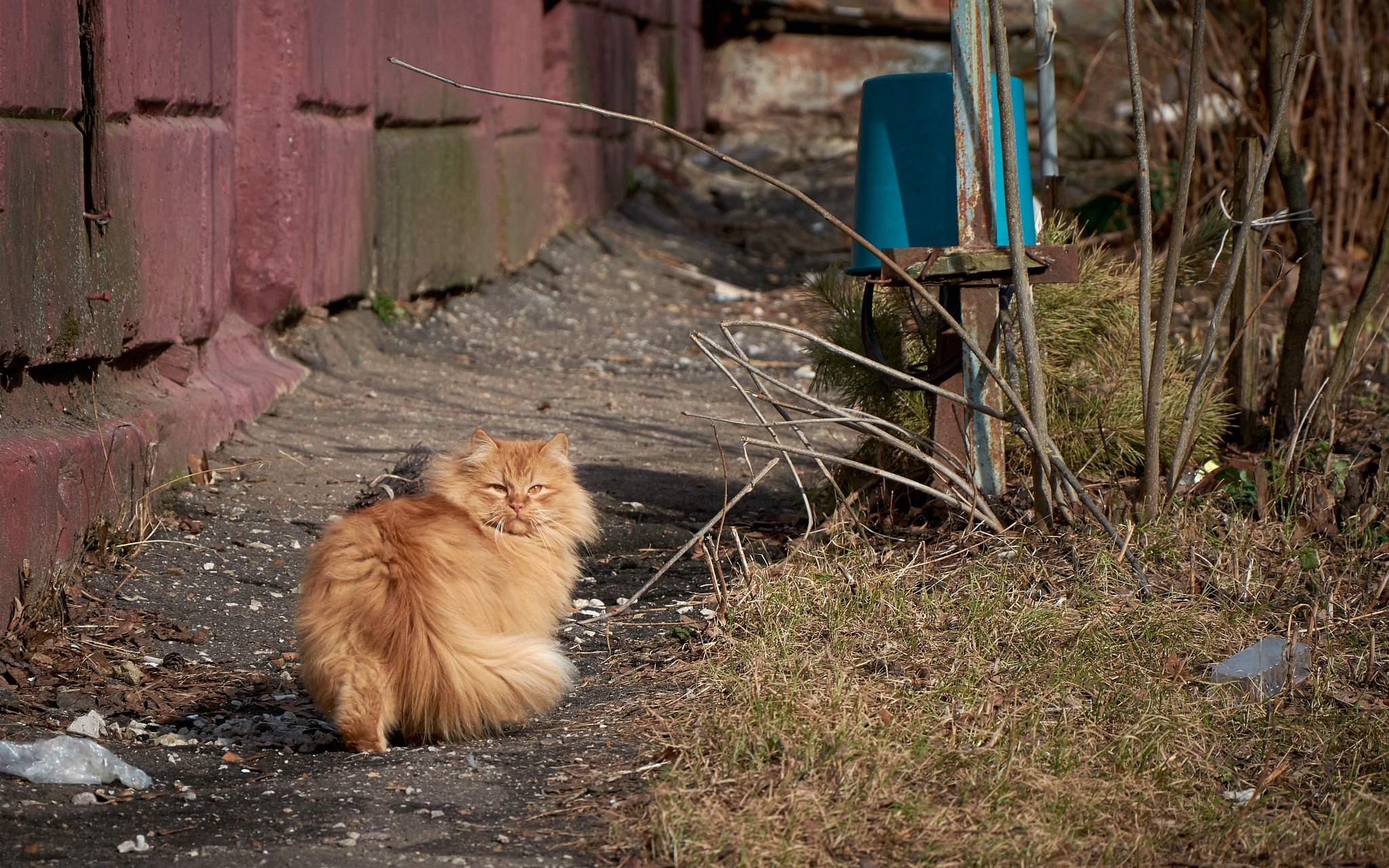 Spherical Cat in a Vacuum by levelost