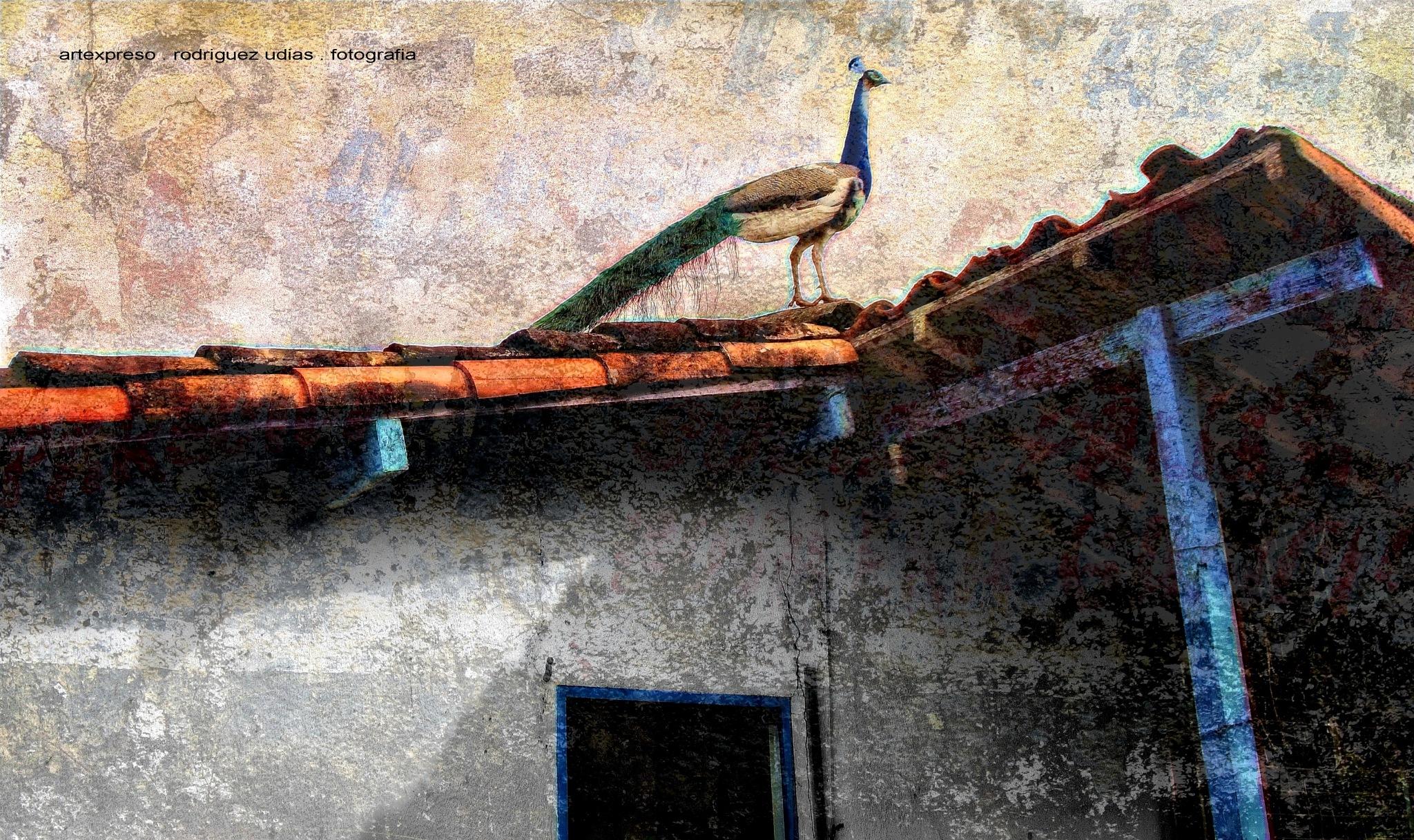 PAVO REAL . PAISAJES DE MINAS / ARTEXPRESO 2018 by  Artexpreso