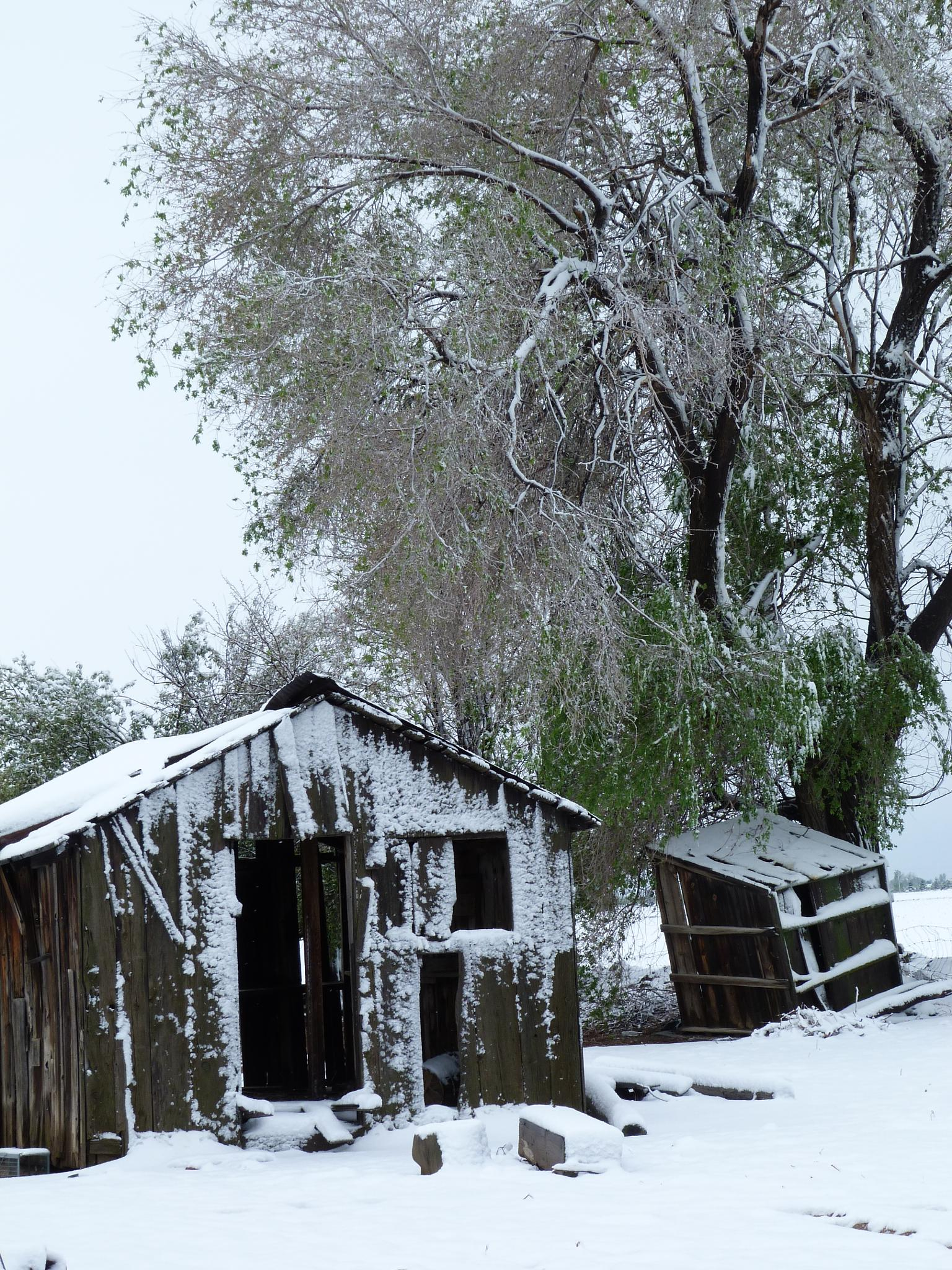 late spring storm on the family farm  by NaomiThomsenCastonguay
