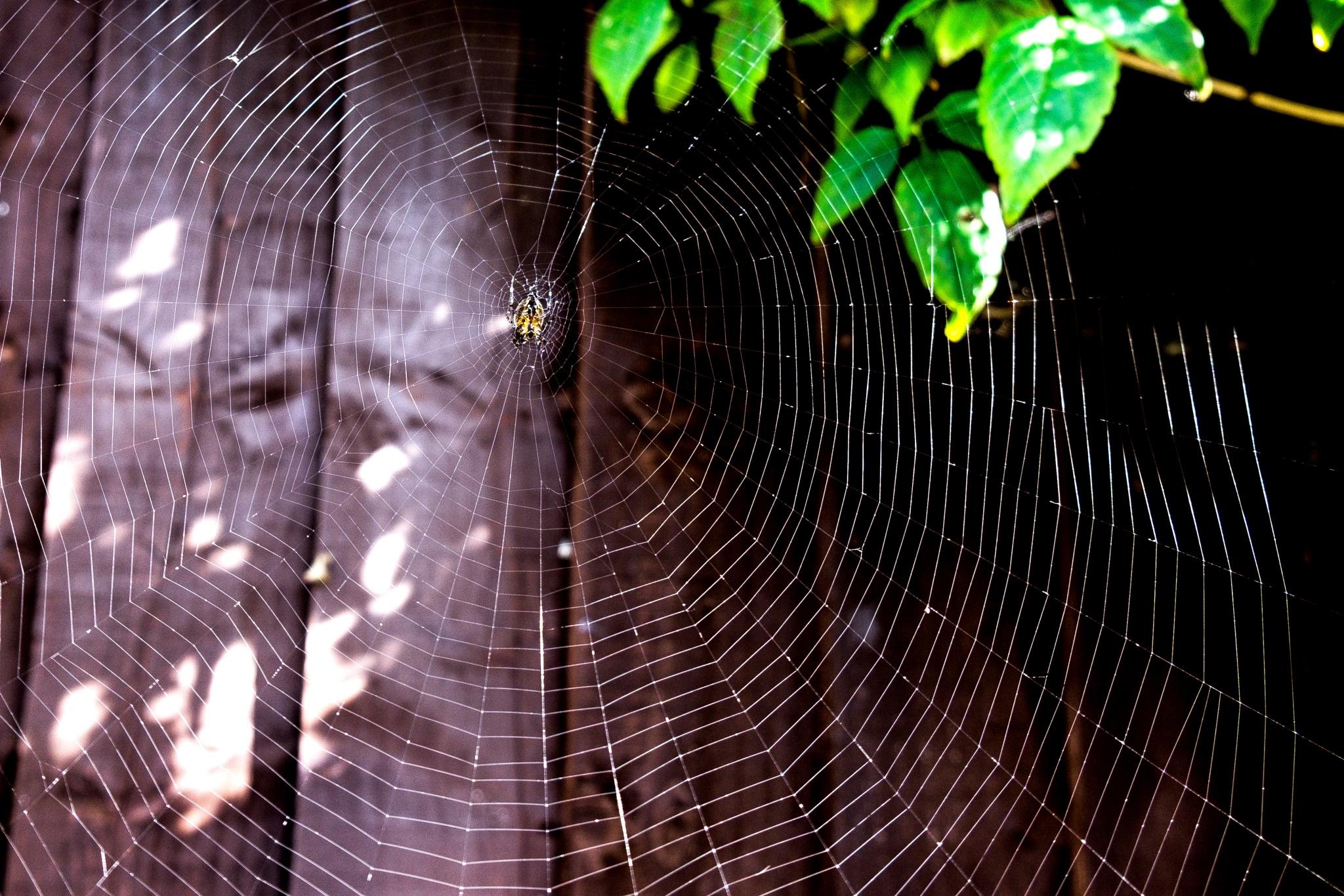 Wonder Web by Gra'M