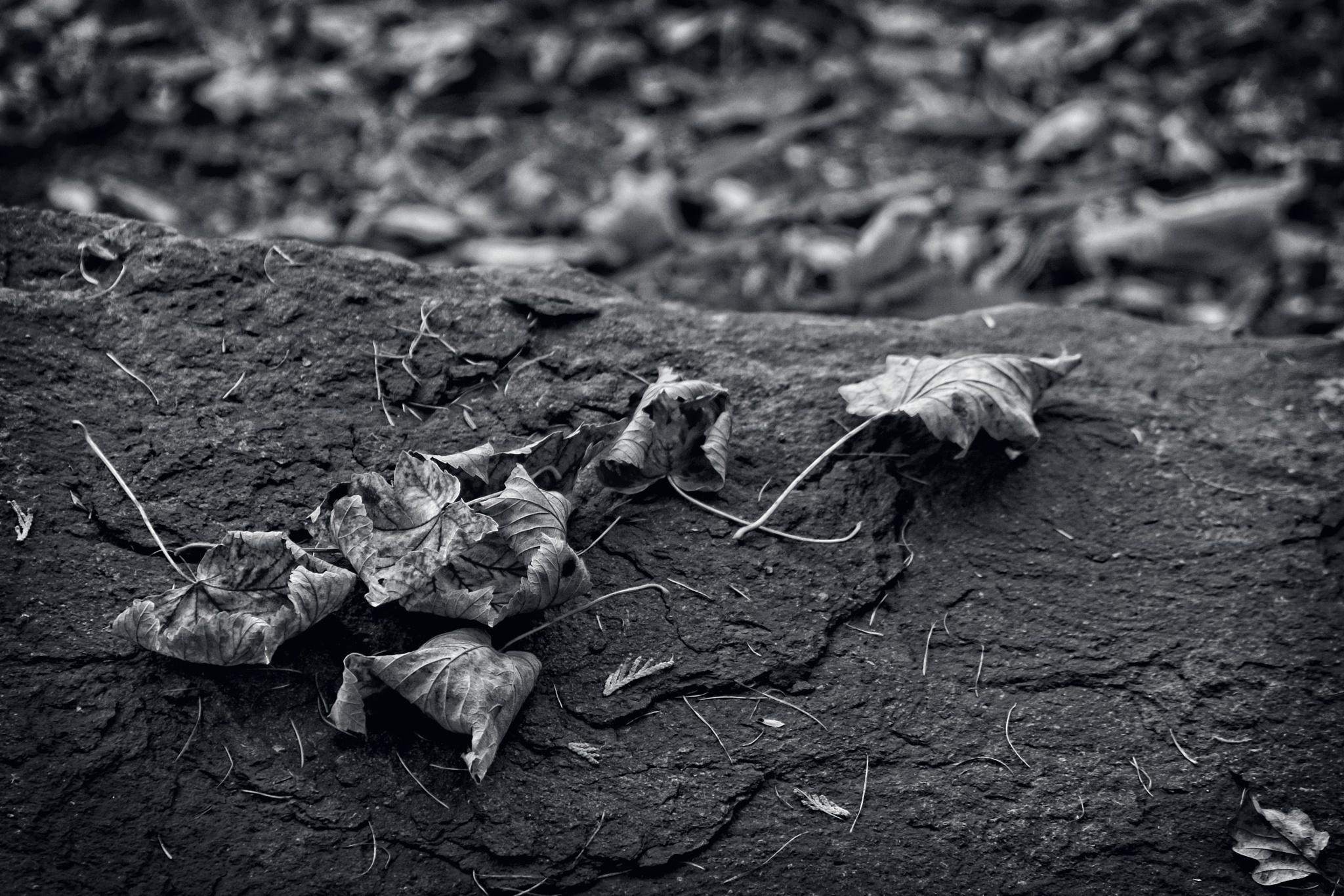 Fallen Leaves in Black & White by Gra'M