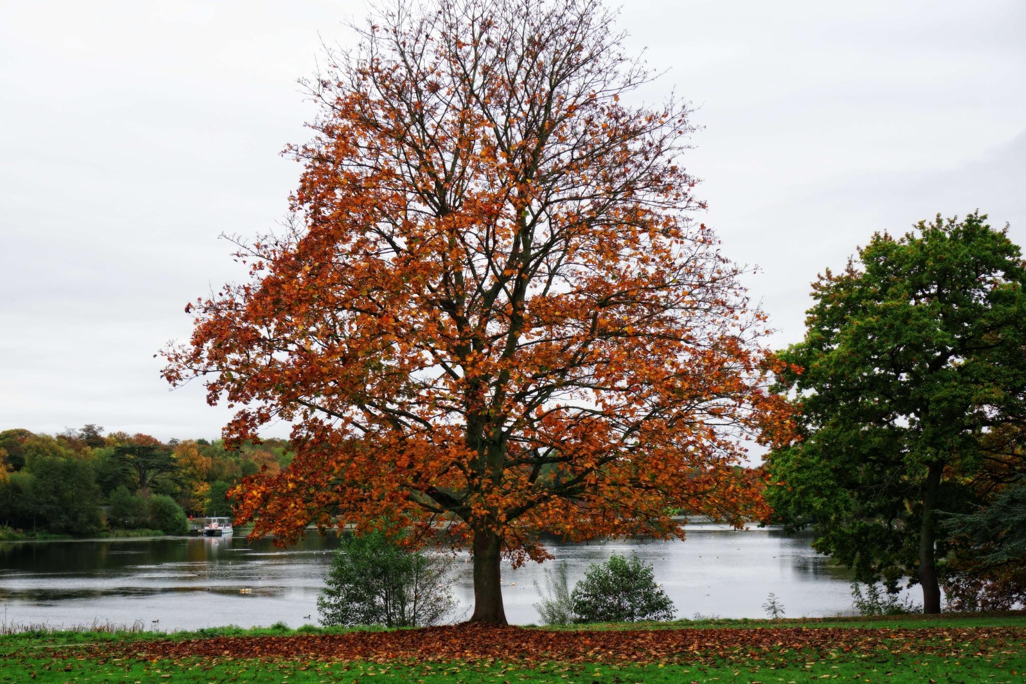 Bronze Leaves by Gra'M
