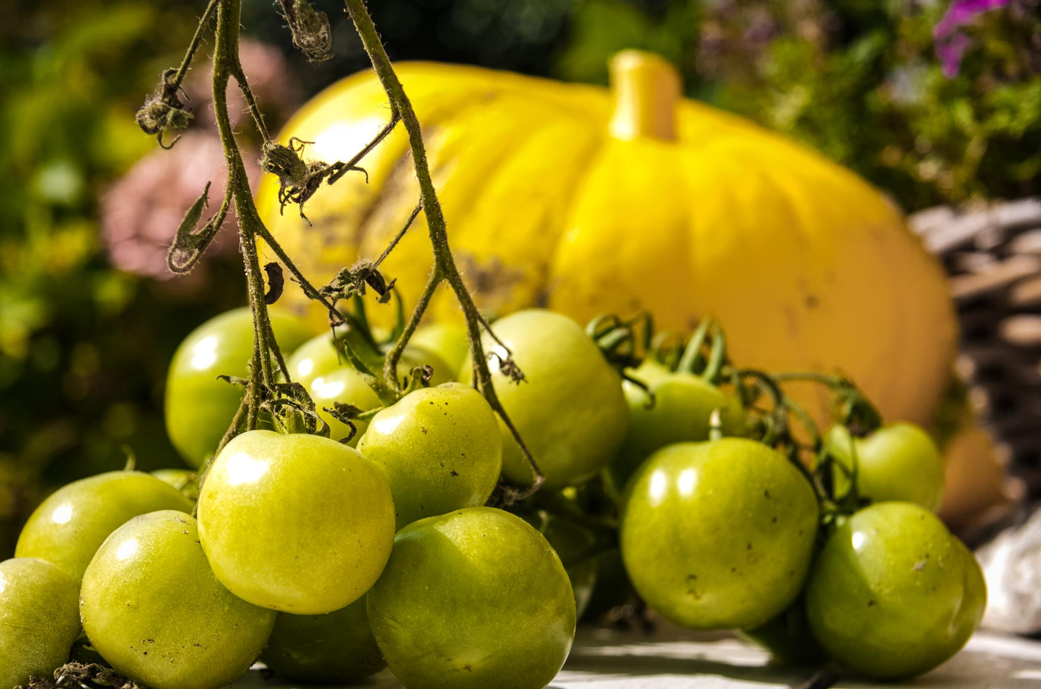 Green tomatoes by Vogala