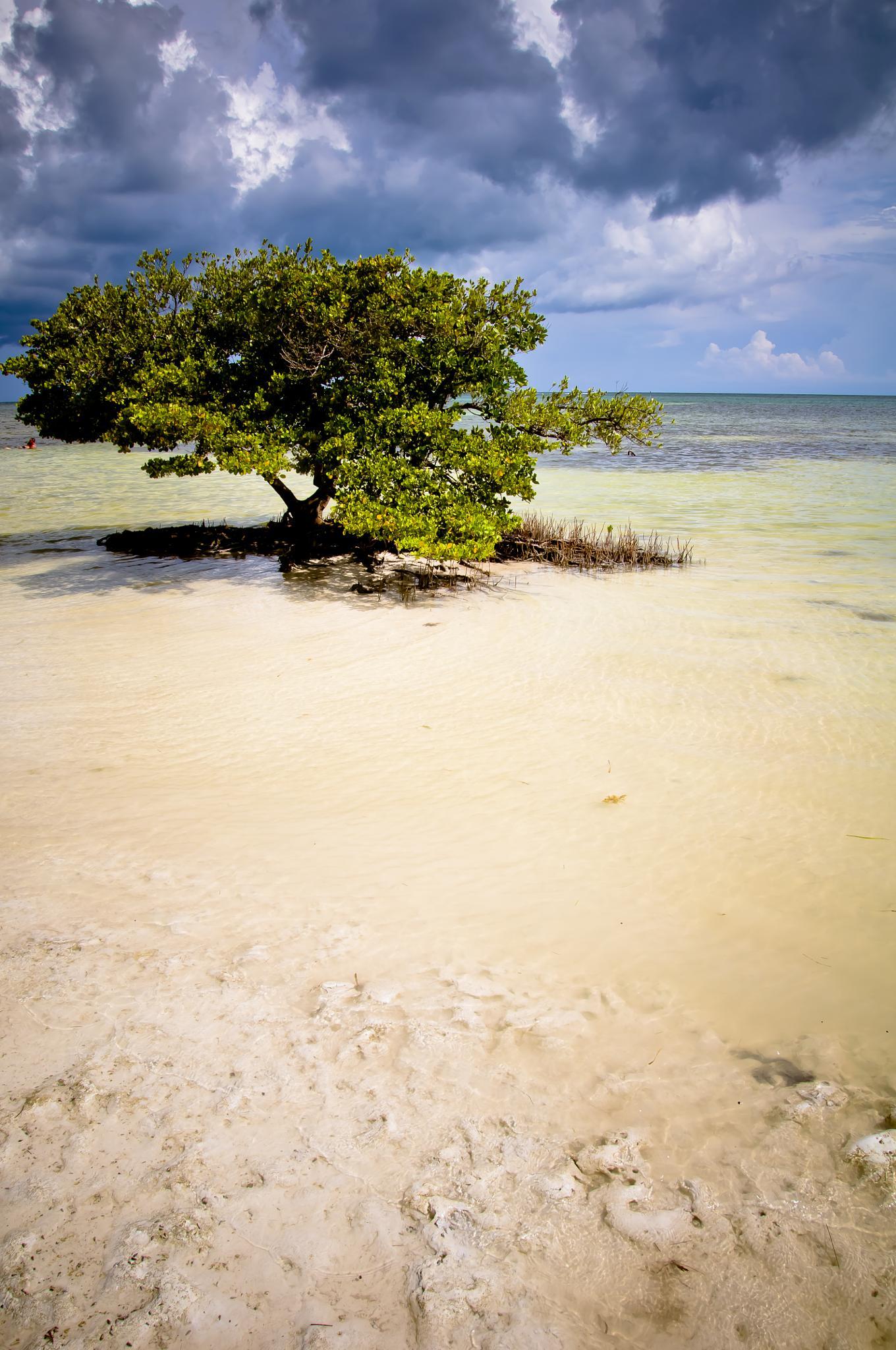 Lonely Tree by Matt Chlodnicki