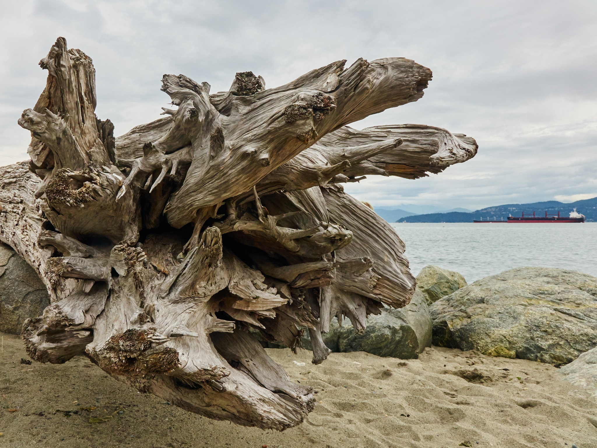 Driftwood, Spanish Banks, Vancouver by awish2c