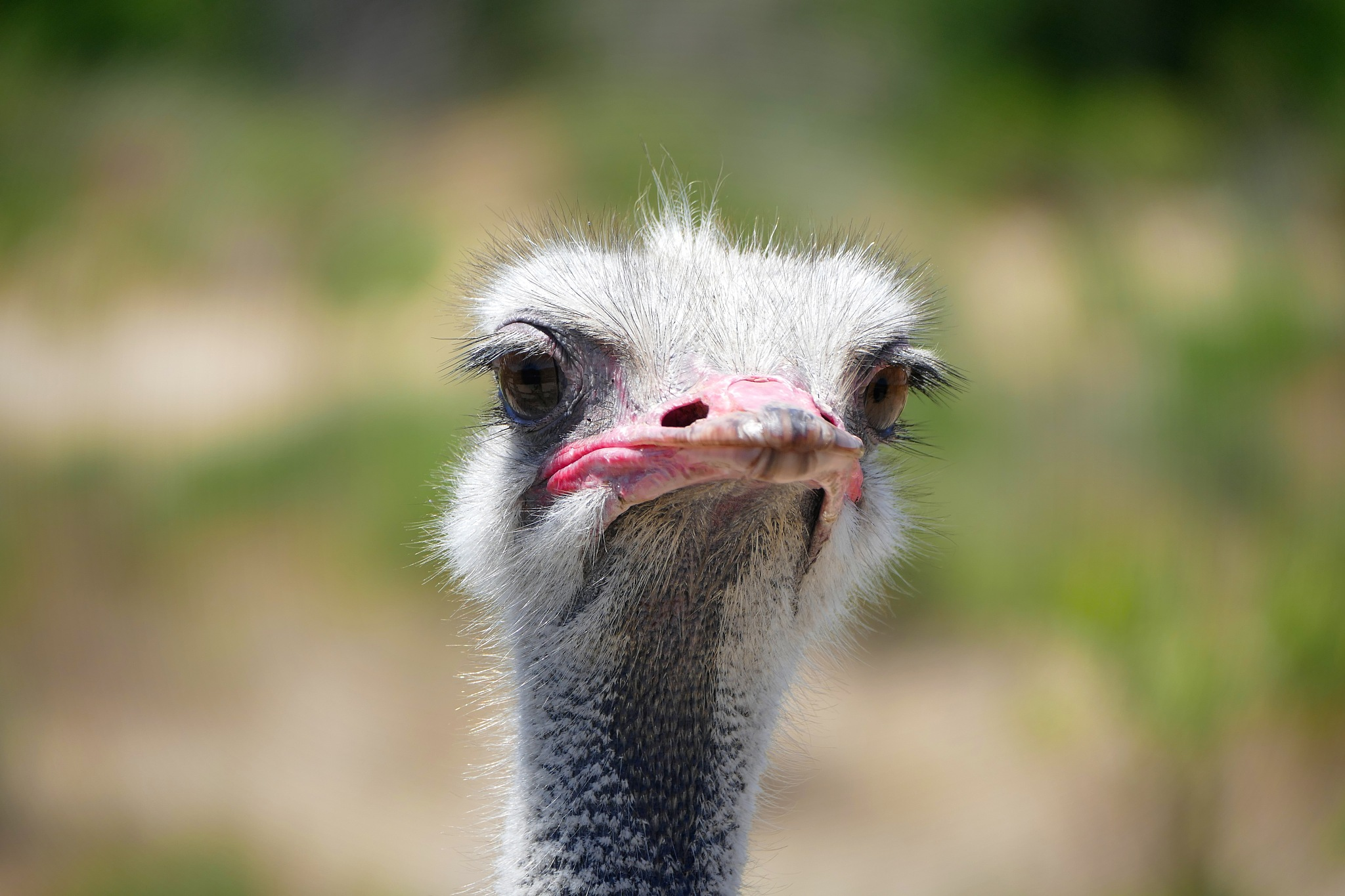 Ostrich Eyes by Thinduck