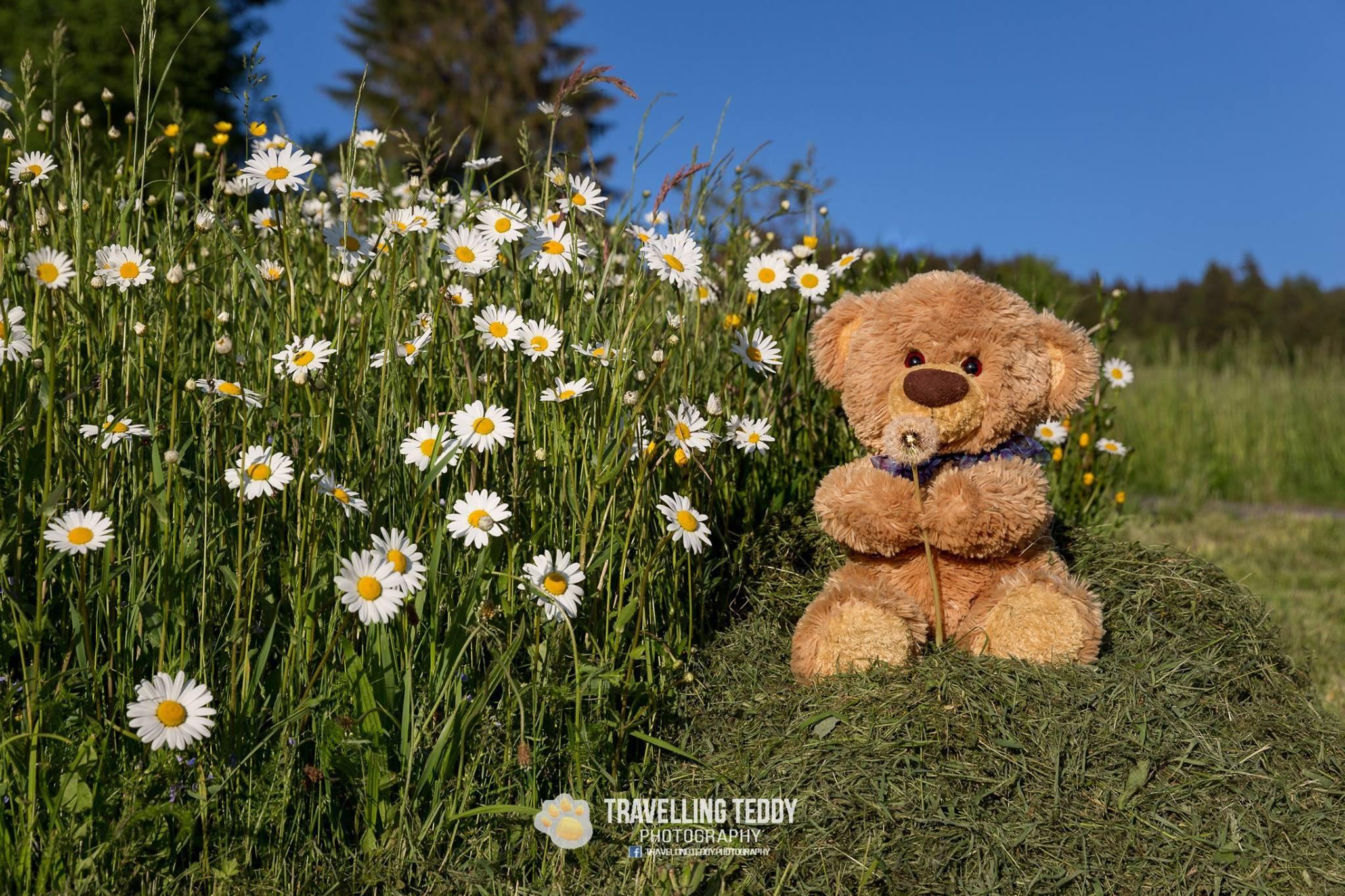 Teddy loves flowers by Christian Kneidinger