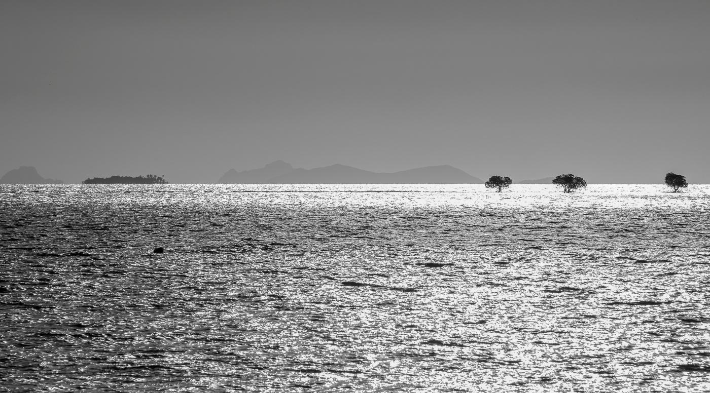 Three trees in the Ocean by Trevor McKinnon